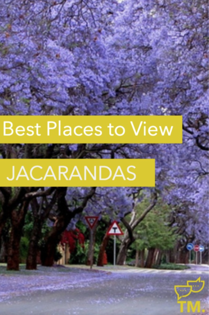 best places to see Jacarandas