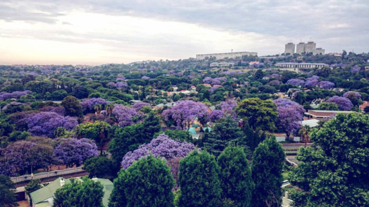 Best Places to see Jacarandas in Johannesburg