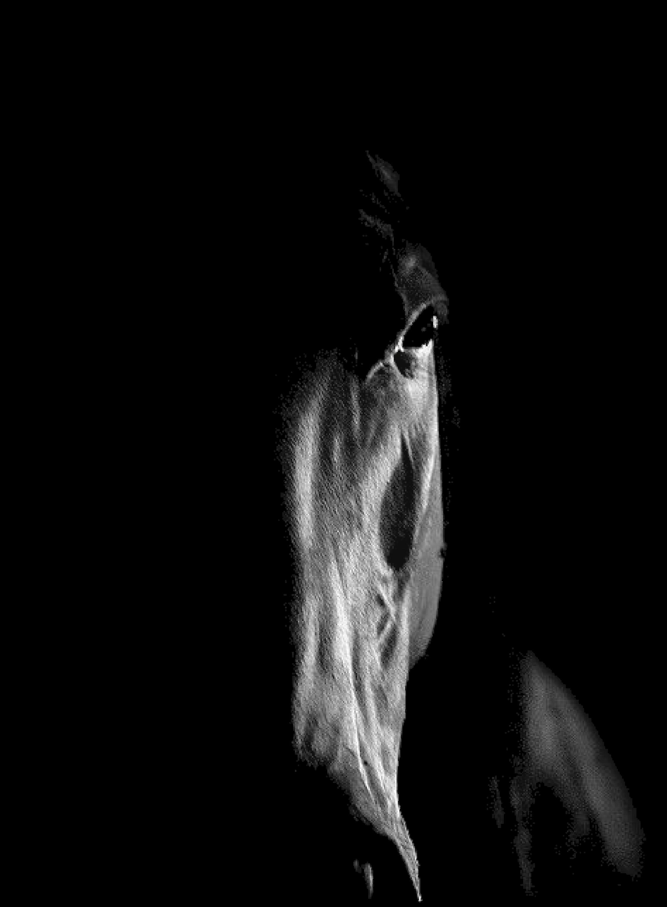cara caballo negro copia.png