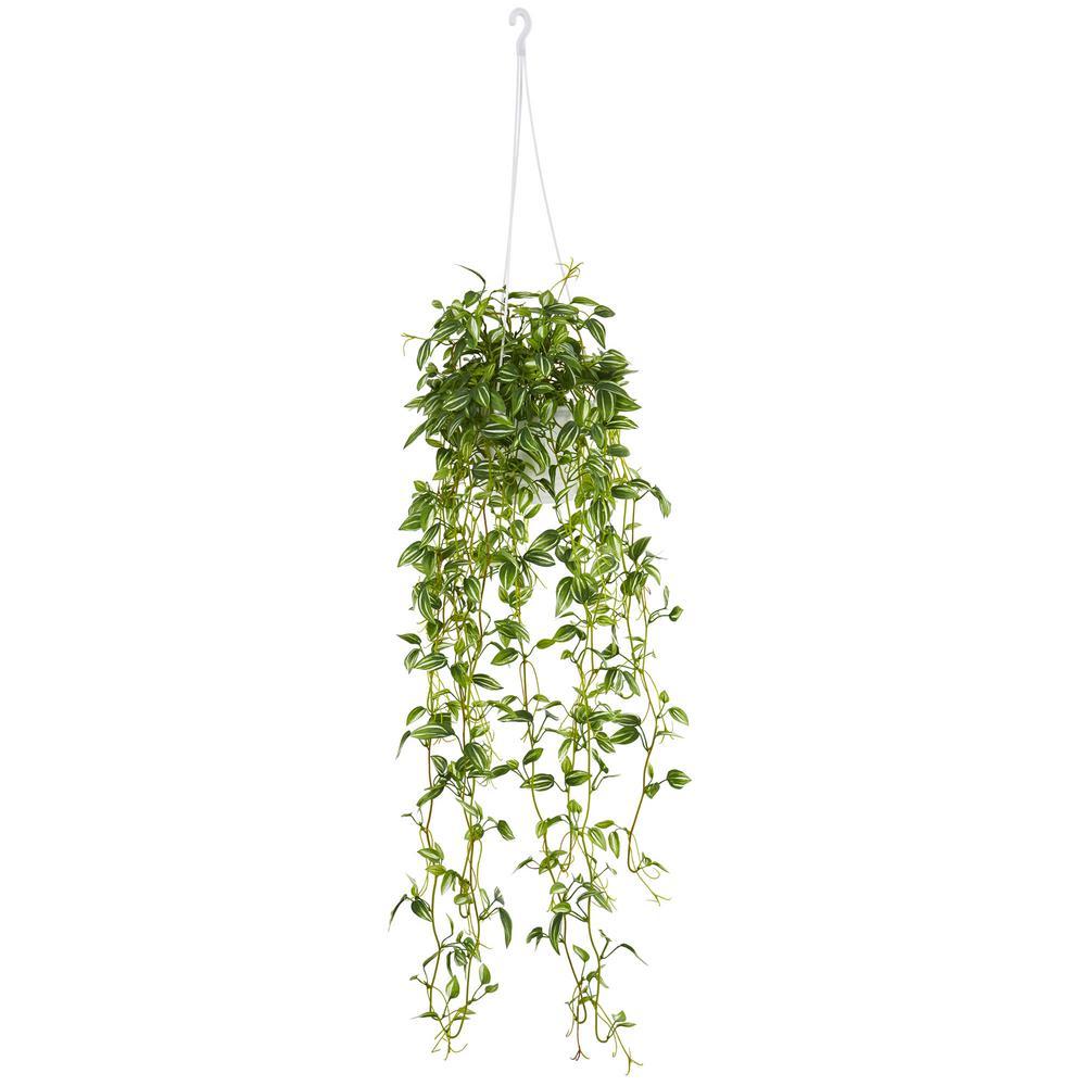 Creeper Plant