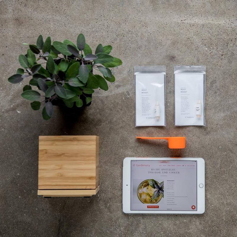 Indoor Grow Your Own Sage Kit