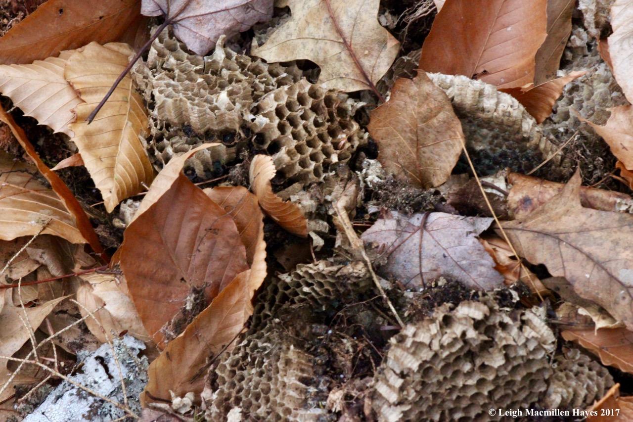 m8-bees-nest-1.jpg