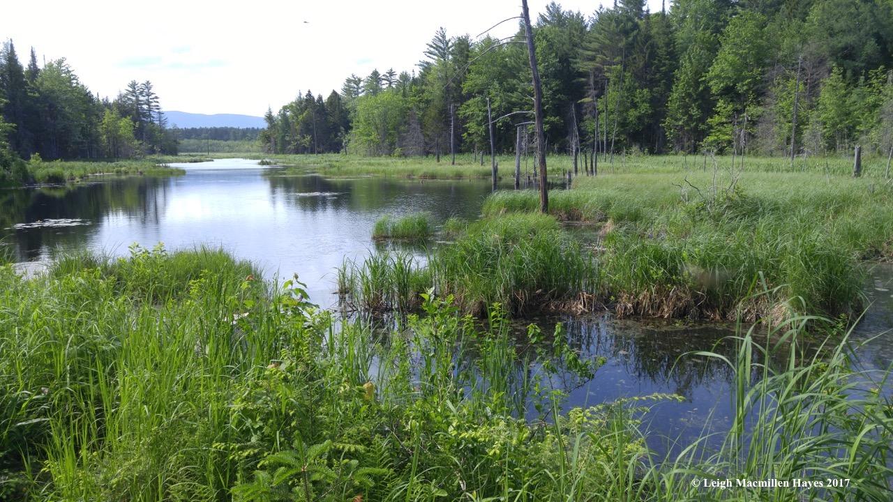 l-long-meadow.jpg