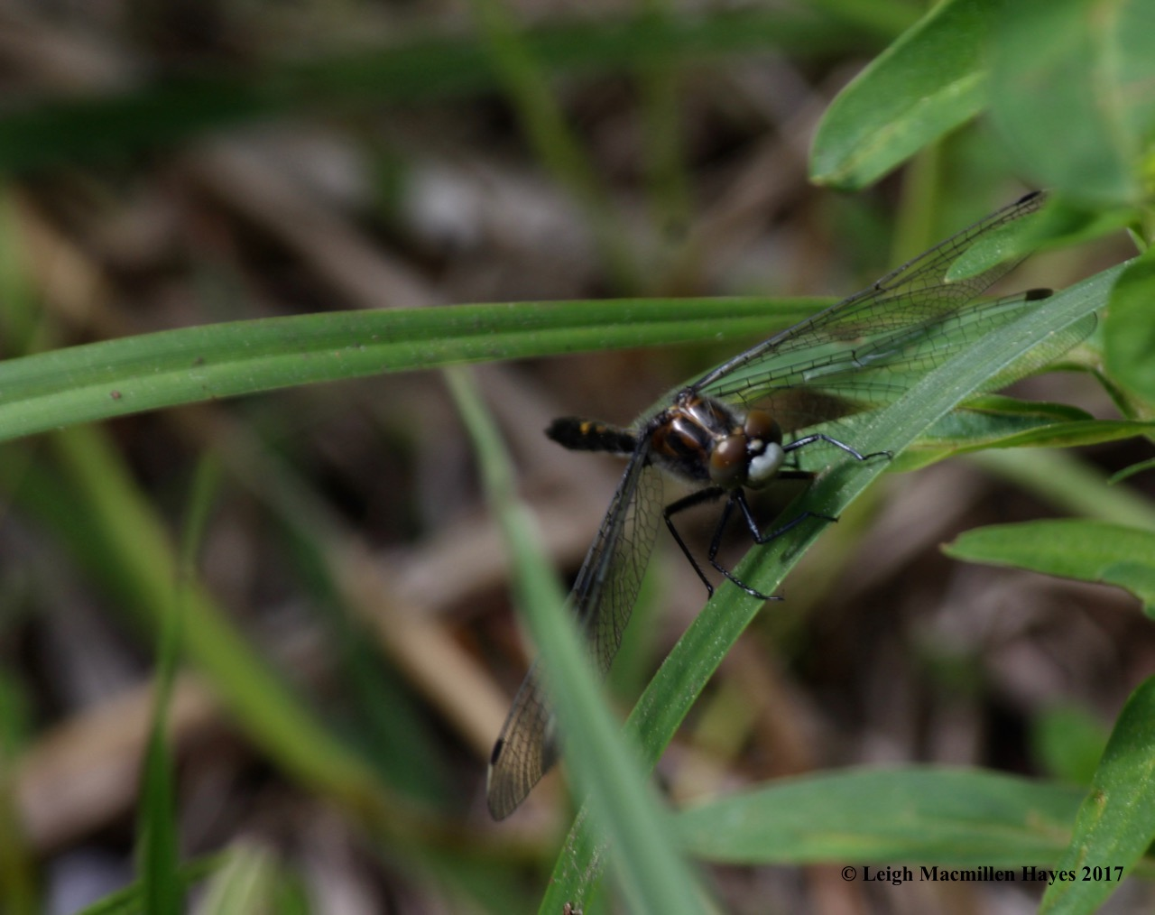 l-eye-to-eye-with-dragonfly-white-face.jpg