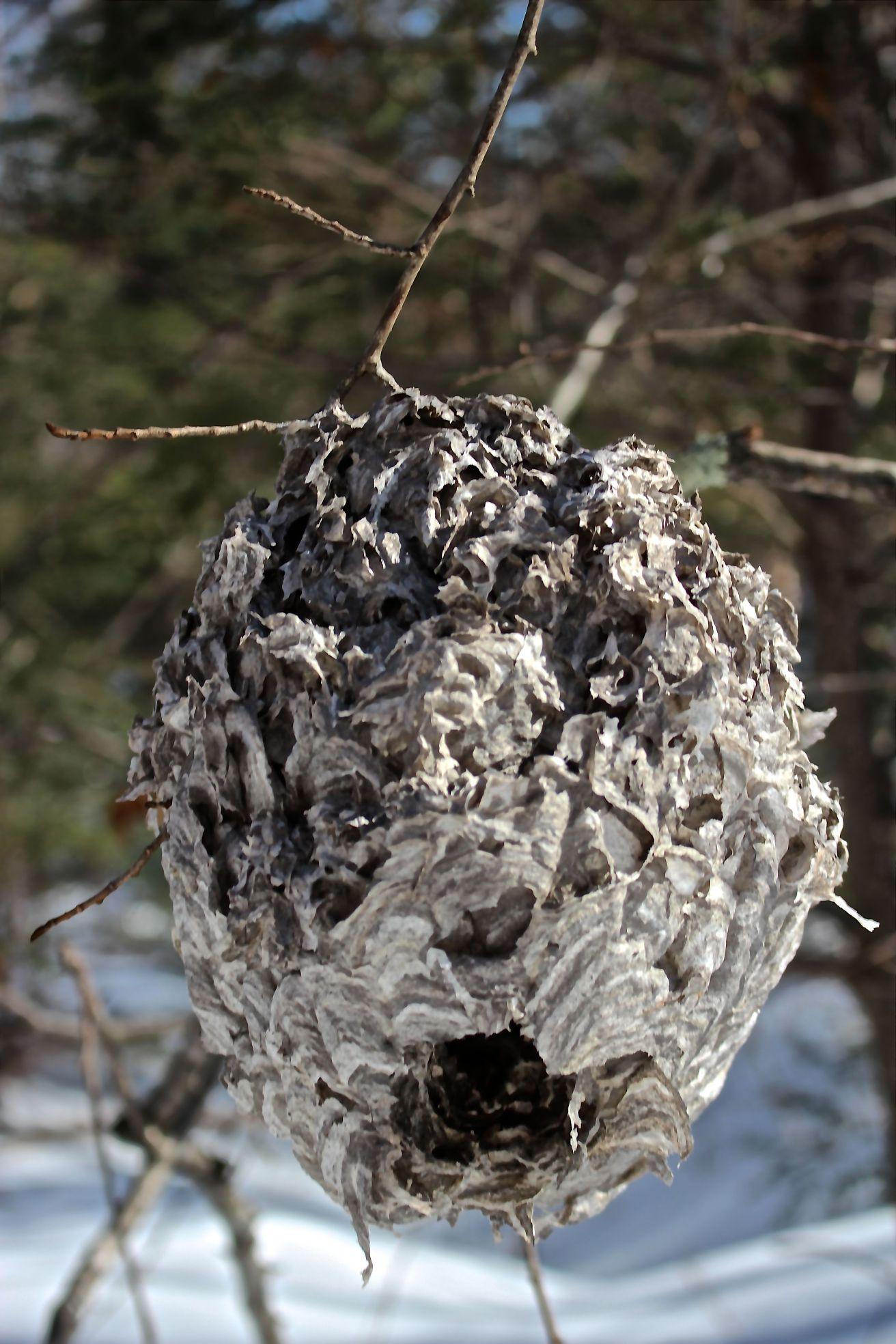 sb-nest-3.jpg