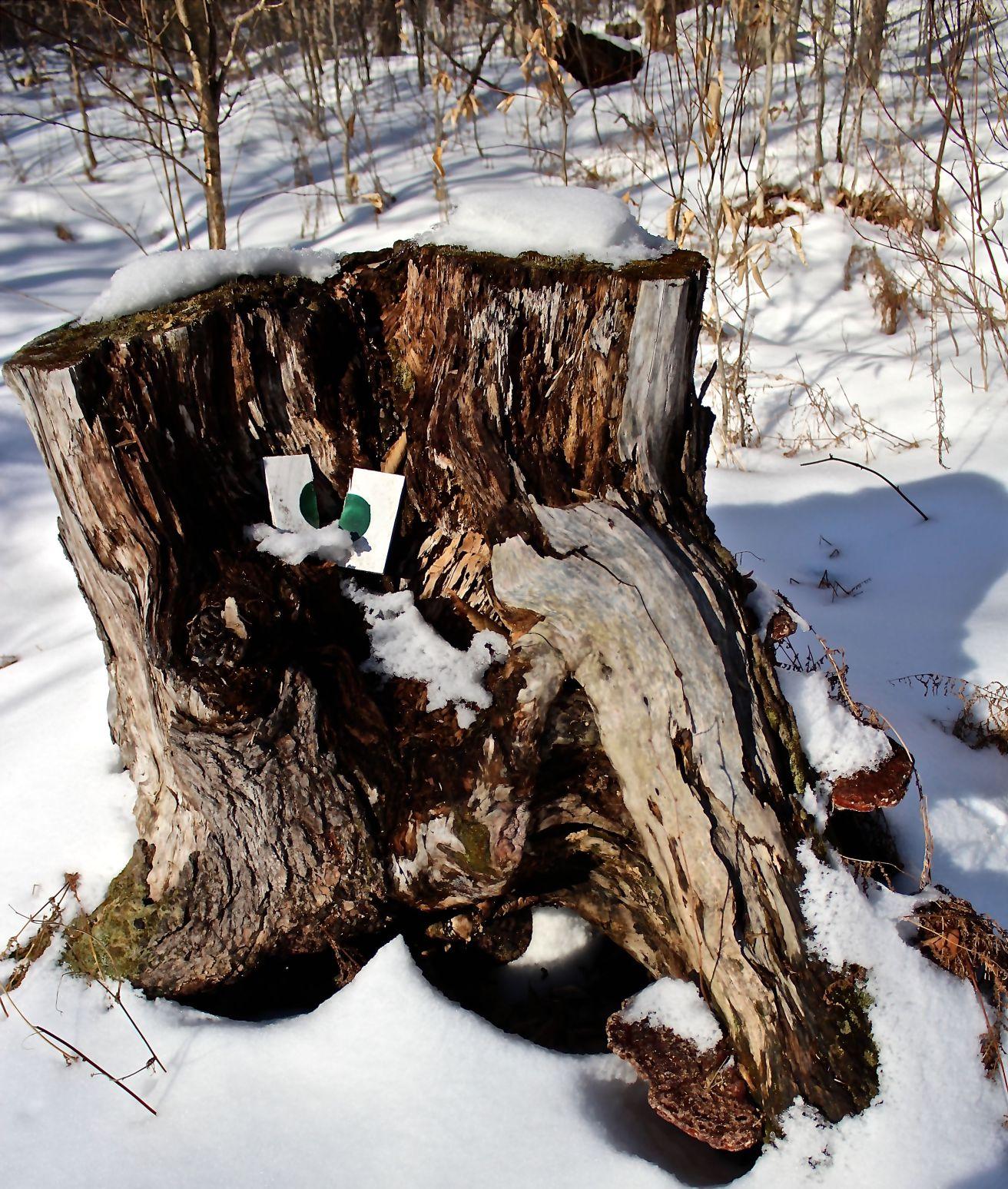 sb-hemlock-stump-et-al.jpg