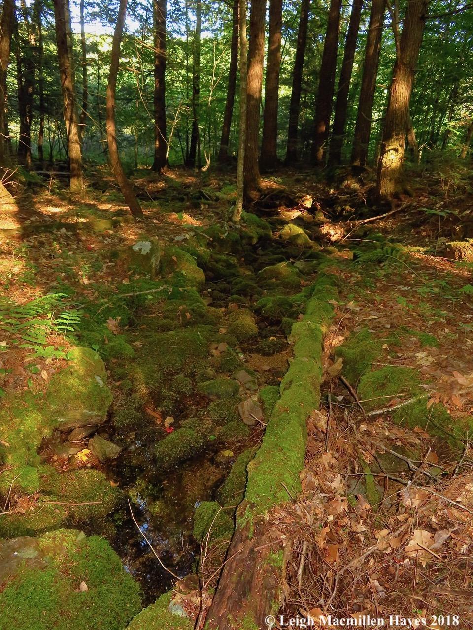 23-dry-stream-bed.jpg