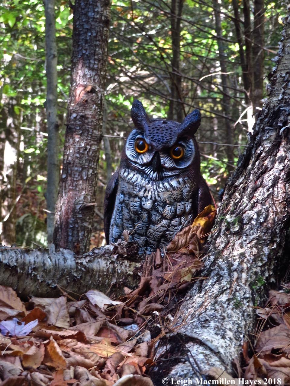 Great Horned Owl Plastica species