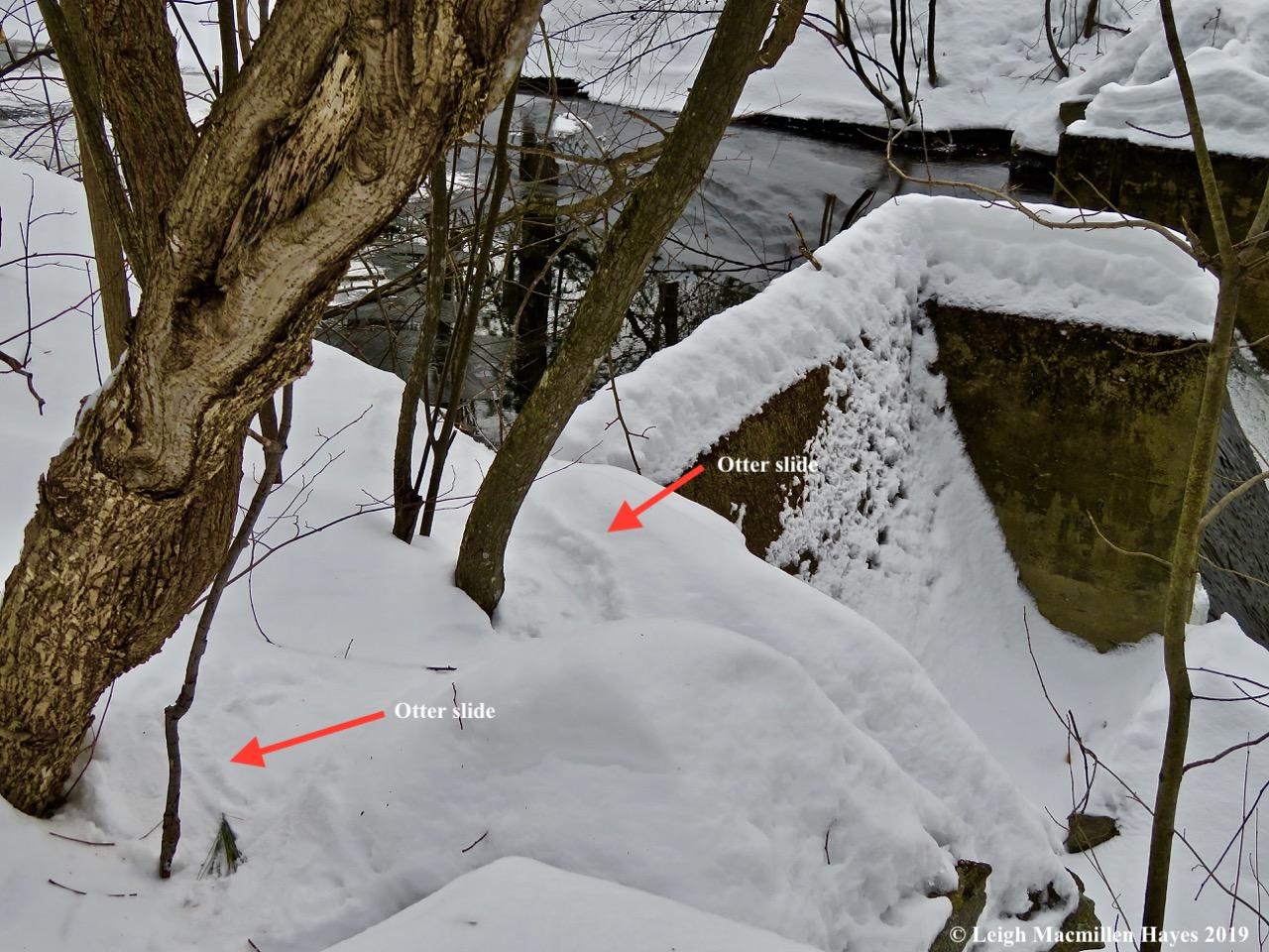 3-otter-slide-from-above.jpg