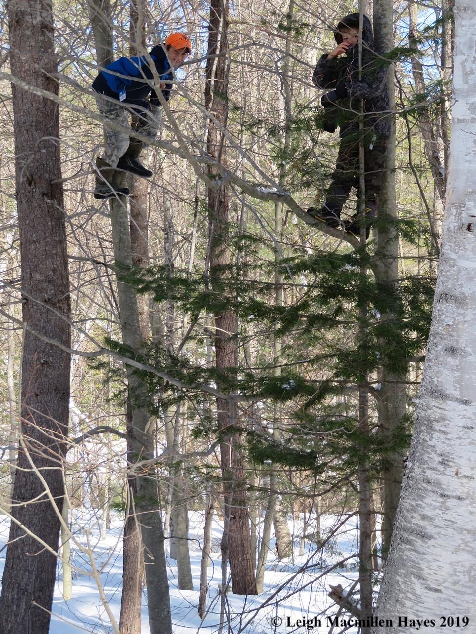 1-tree-climbers.jpg