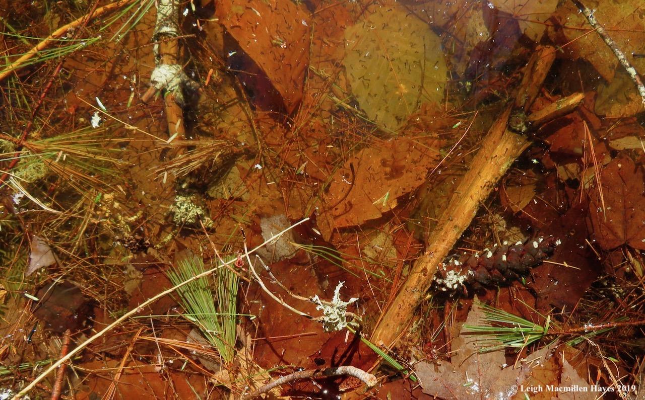 4-mosquito-larvae.jpg