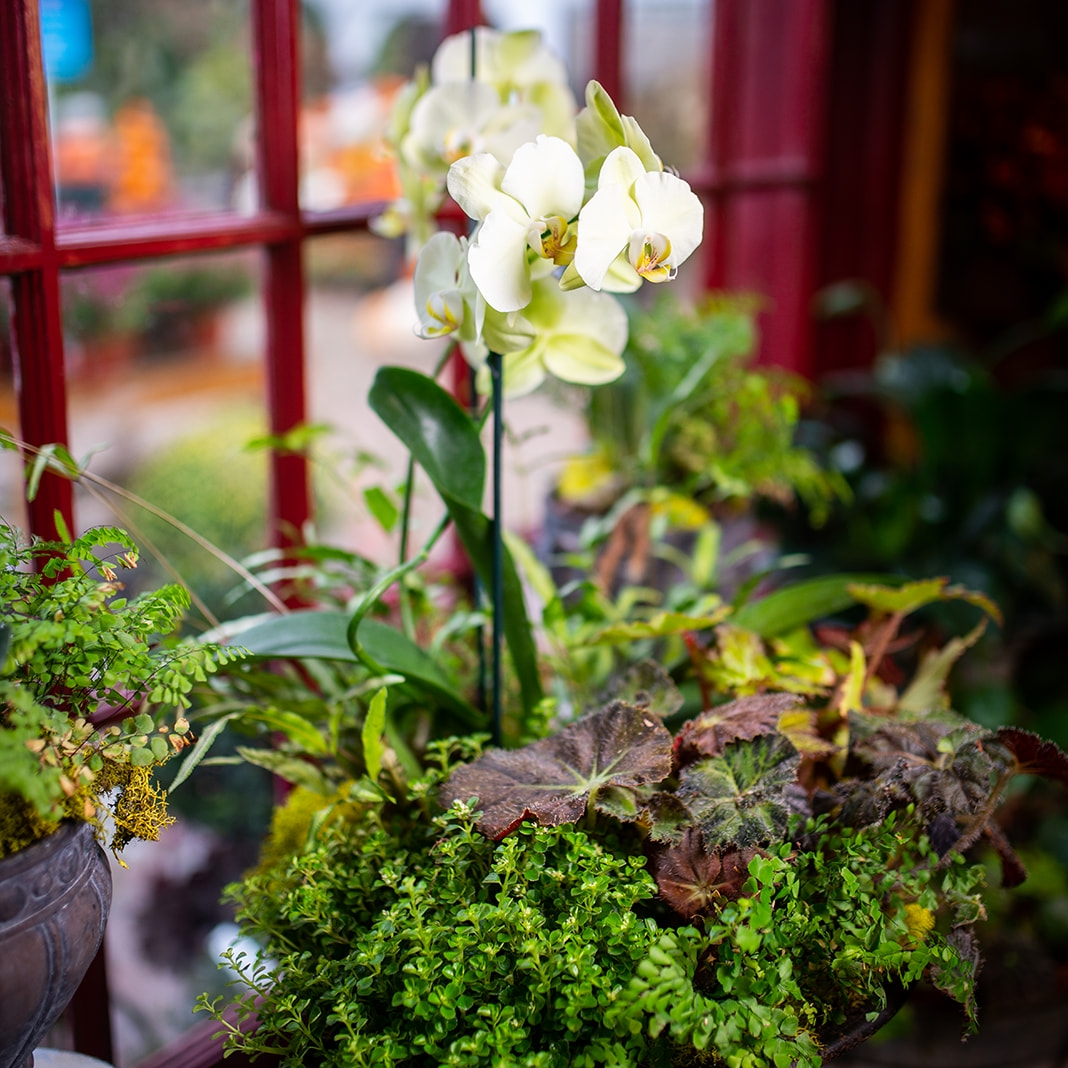 container gardens -