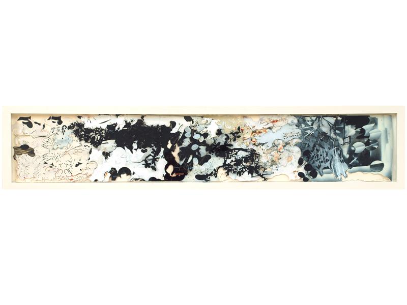 Pine Dust (Untitled #7), 2008