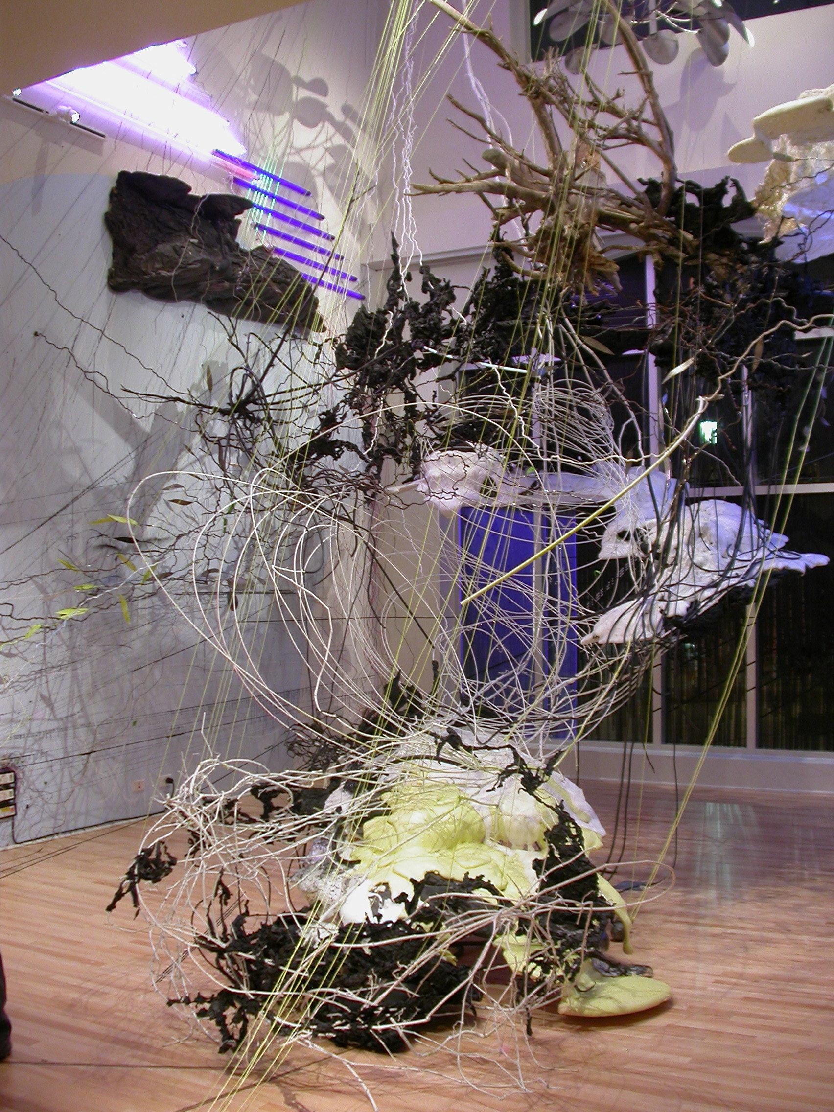 Wild Rose, 2008-2009, Esther Massry Gallery, College of St. Rose, Albany NY