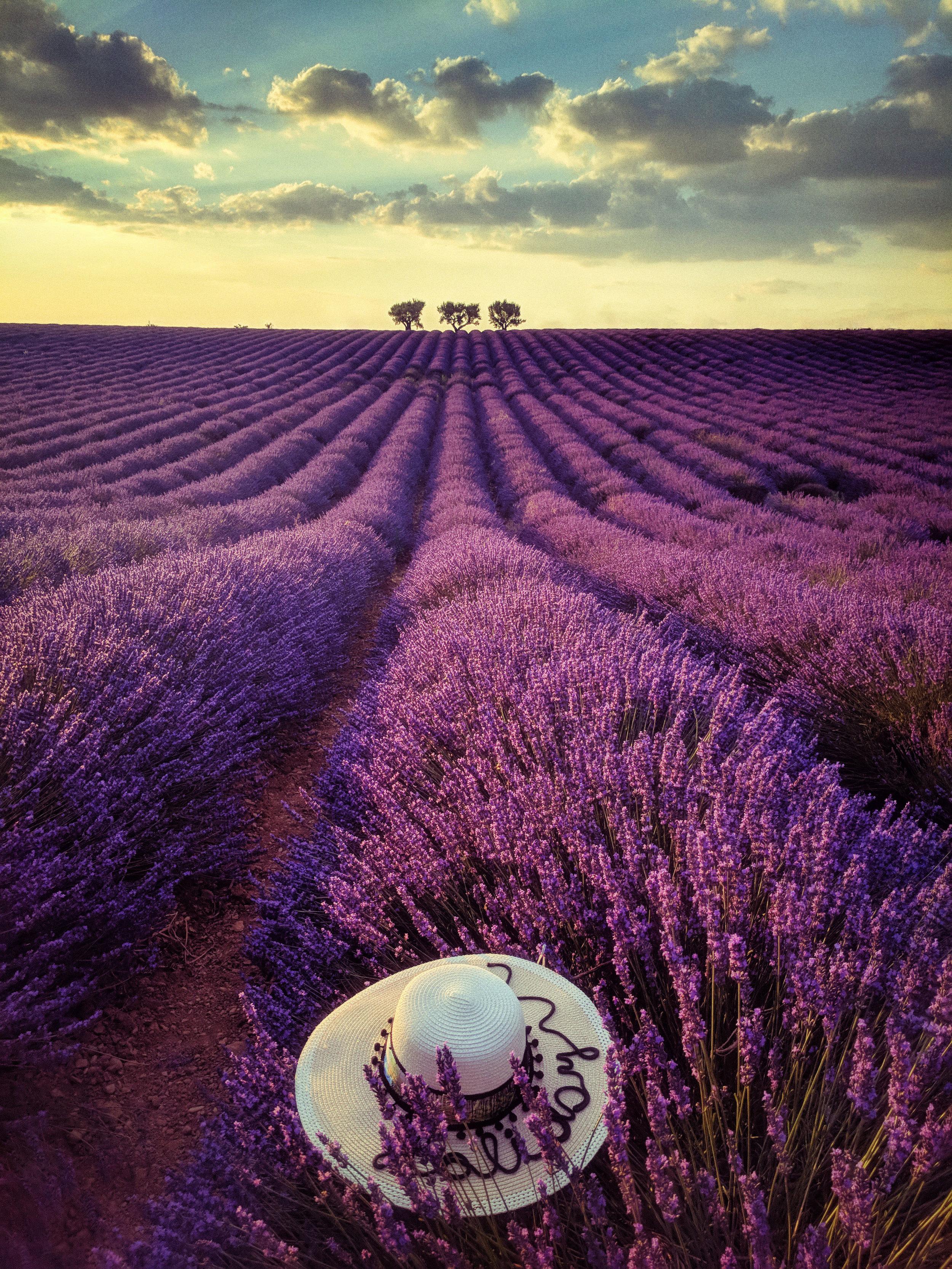 Mobile phone Lavender Provence.jpg