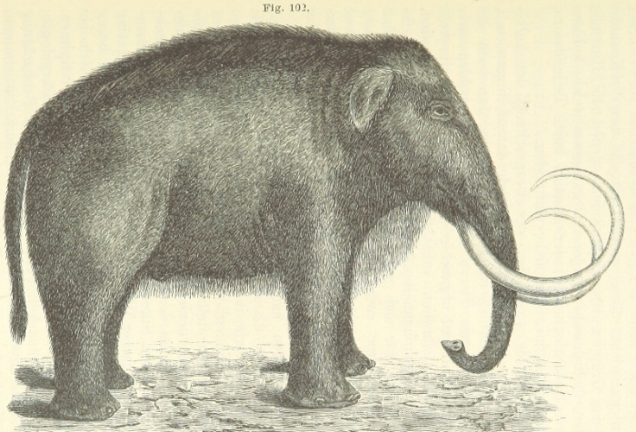 Mammoth with fur.jpg