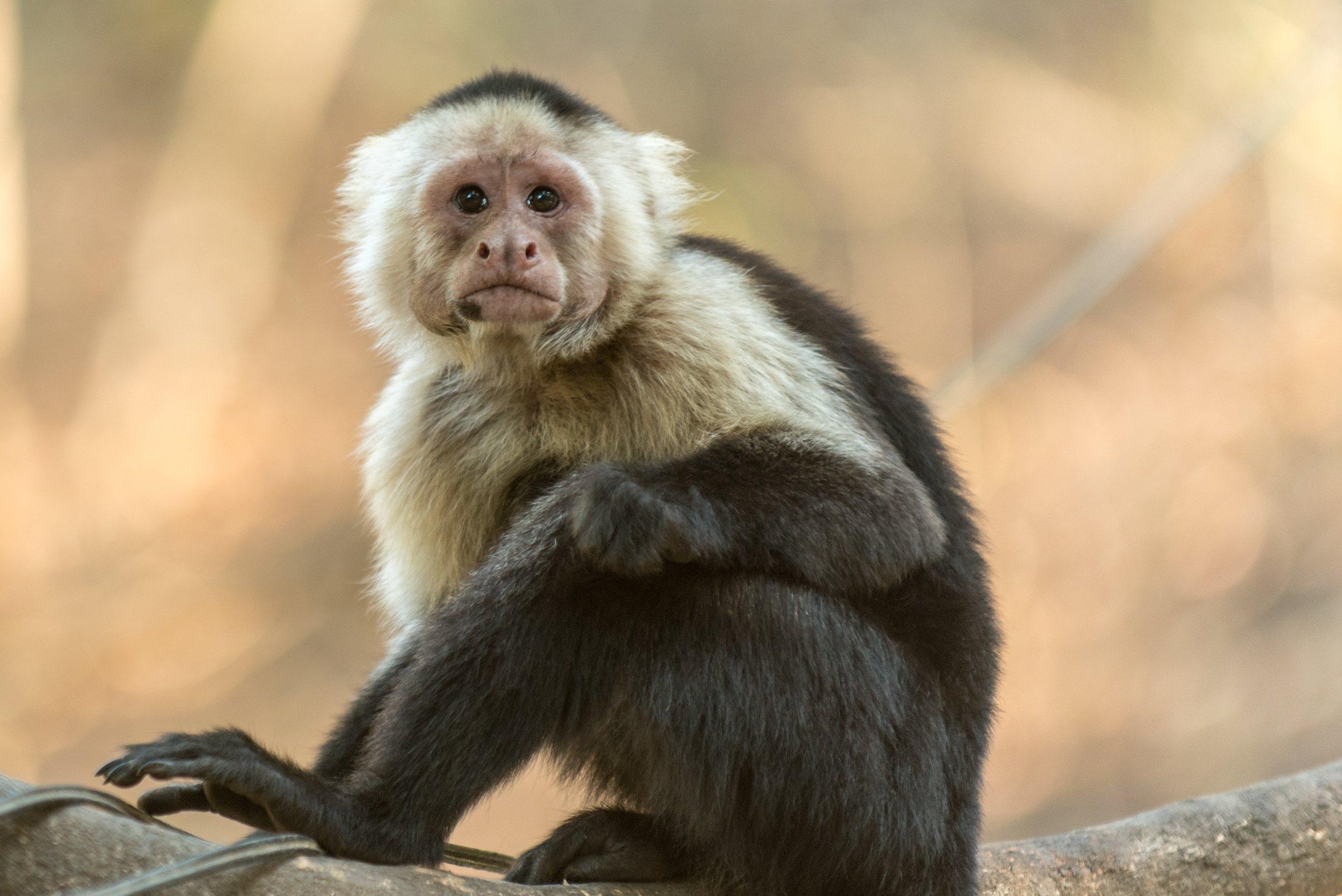 capuchino.jpg