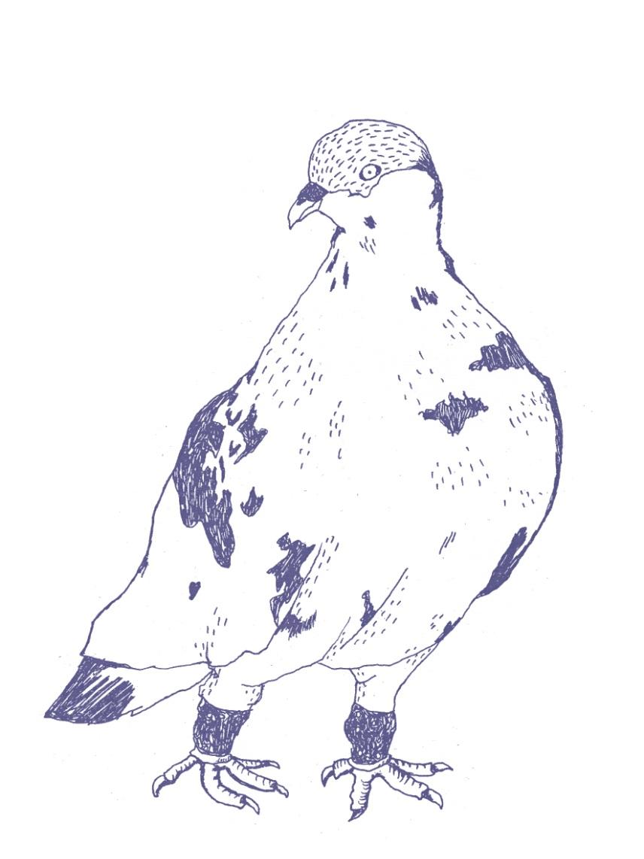 pidgeon.jpg