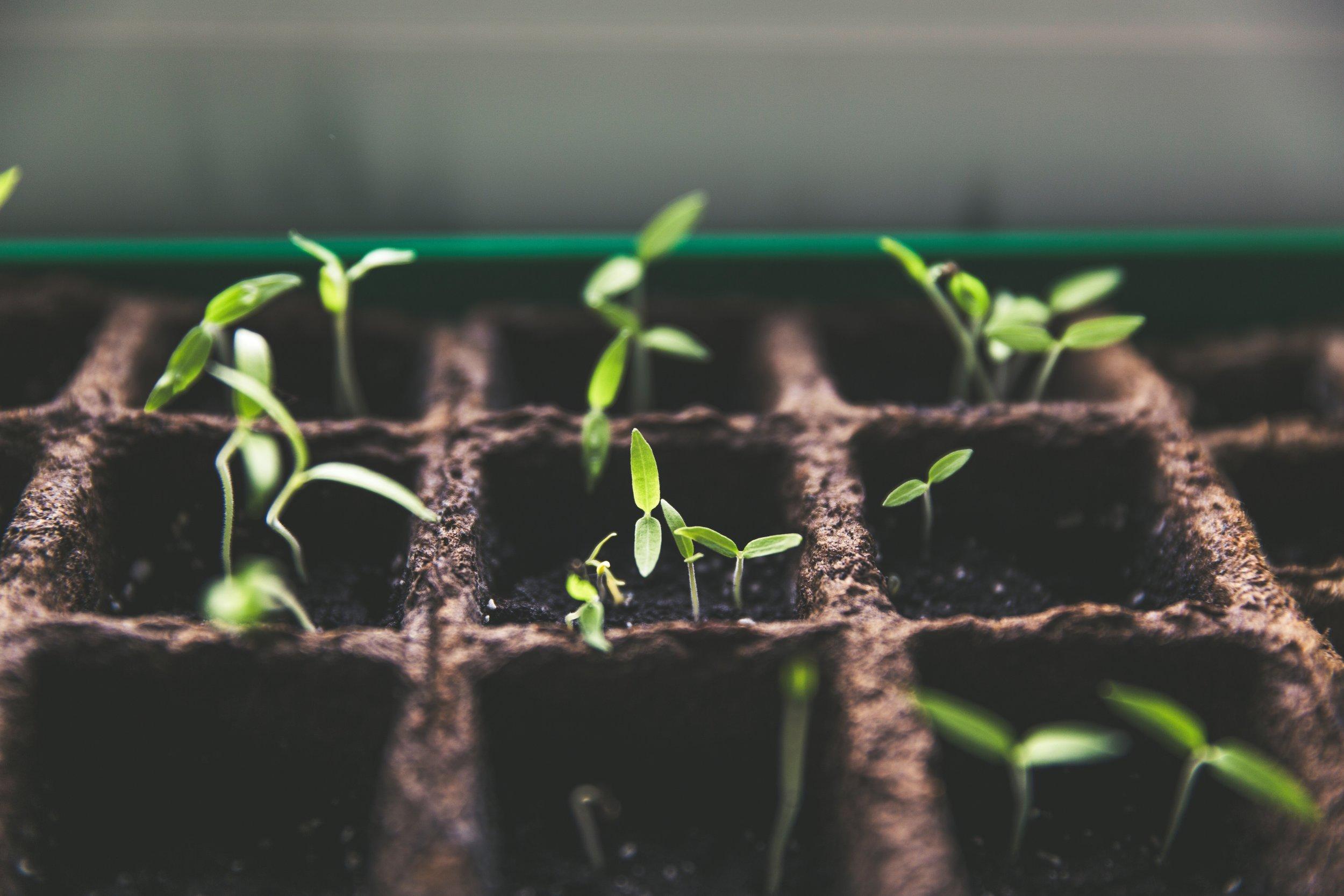 Organic Gardening -
