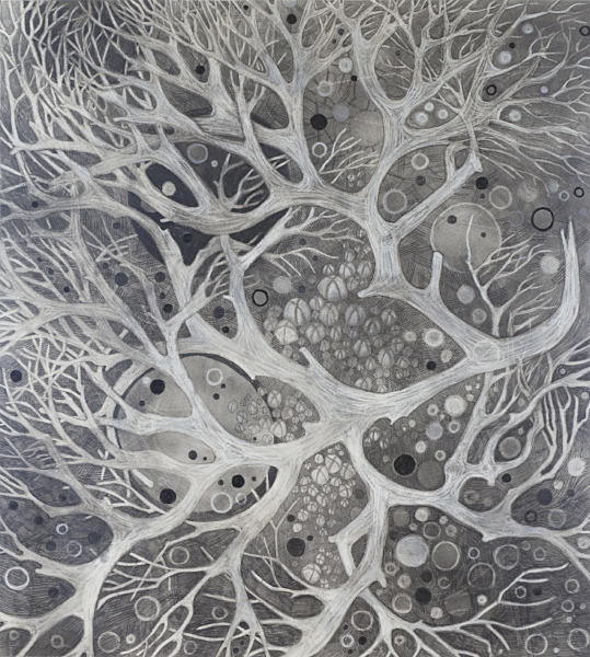 """KELP I   Graphite Pencil and Powder, Chinese White on Paper.  18""""x24"""" FRAMED   $925     Back to Gallery"""