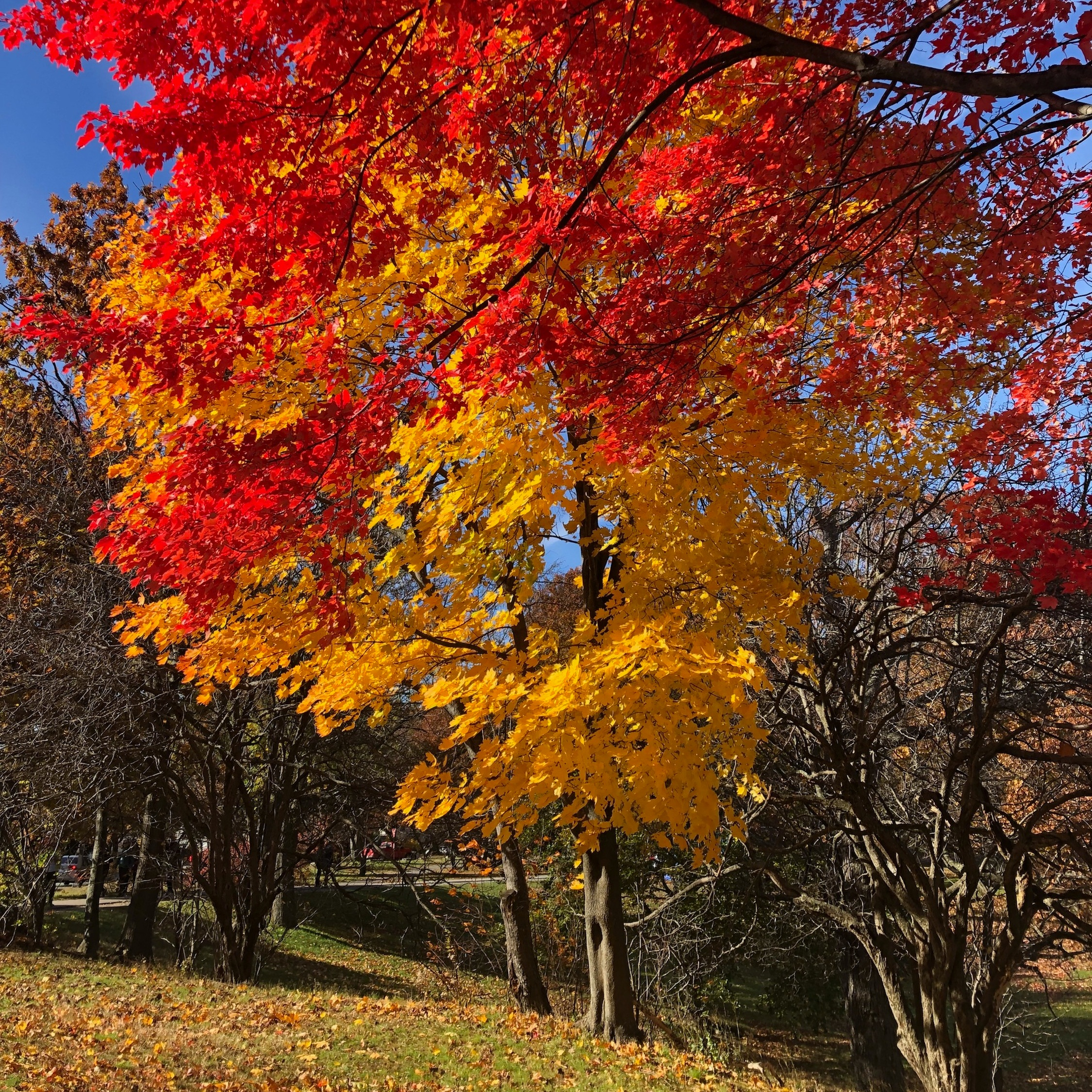 Autumn Leaves by Fiona Lovell Horning