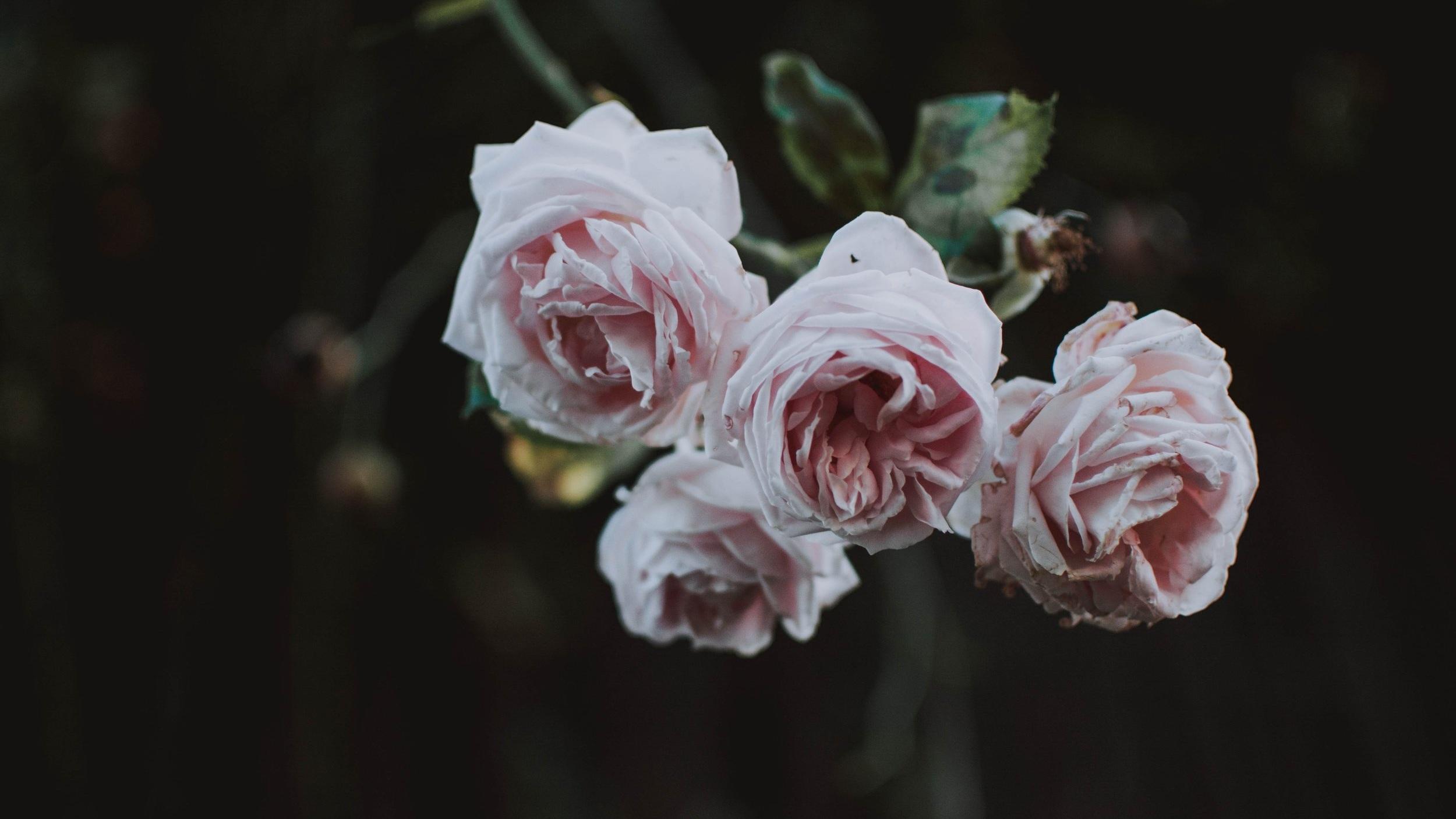 beautiful-bloom-blooming-1463528.jpg