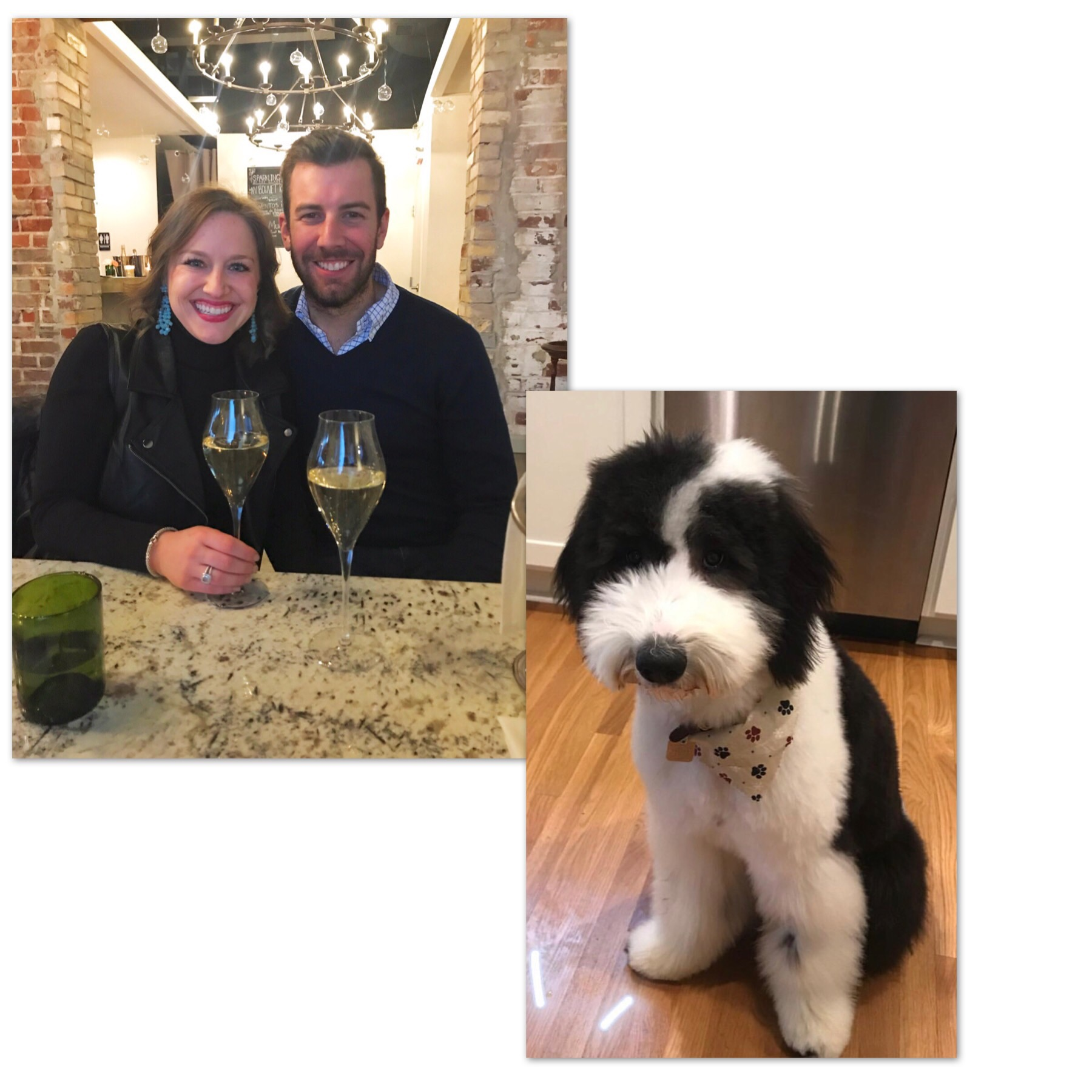 Appreciation post for Holly and Curtis and their Sheepadoodle… - BEVERLY!!! <3