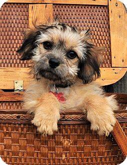 basket puppy.jpg