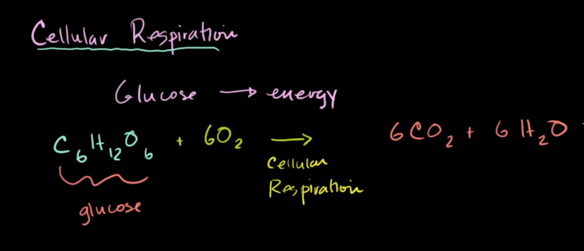 A typical lecture introduction to cellular respiration, starting with a definition. This is from Khan Academy's video  Introduction to Cellular Respiration.  Cellular respiration is fascinating! Why learn with a lecture when students can observe cellular respiration themselves using Pivot Interactives?