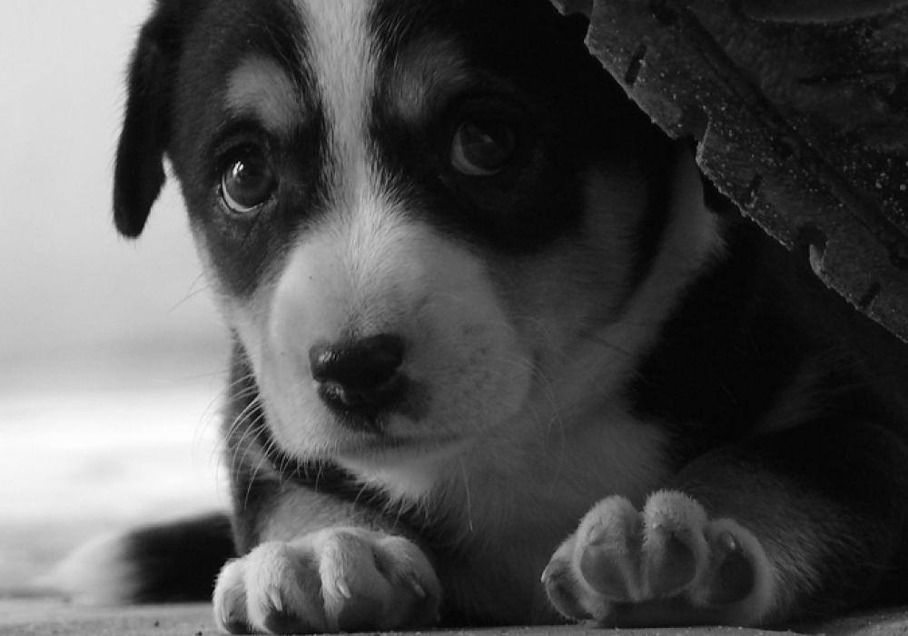 puppy.jpeg