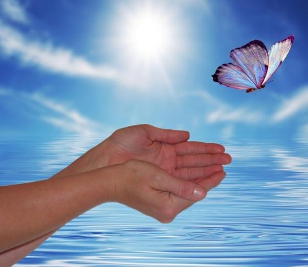 butterfly .jpeg