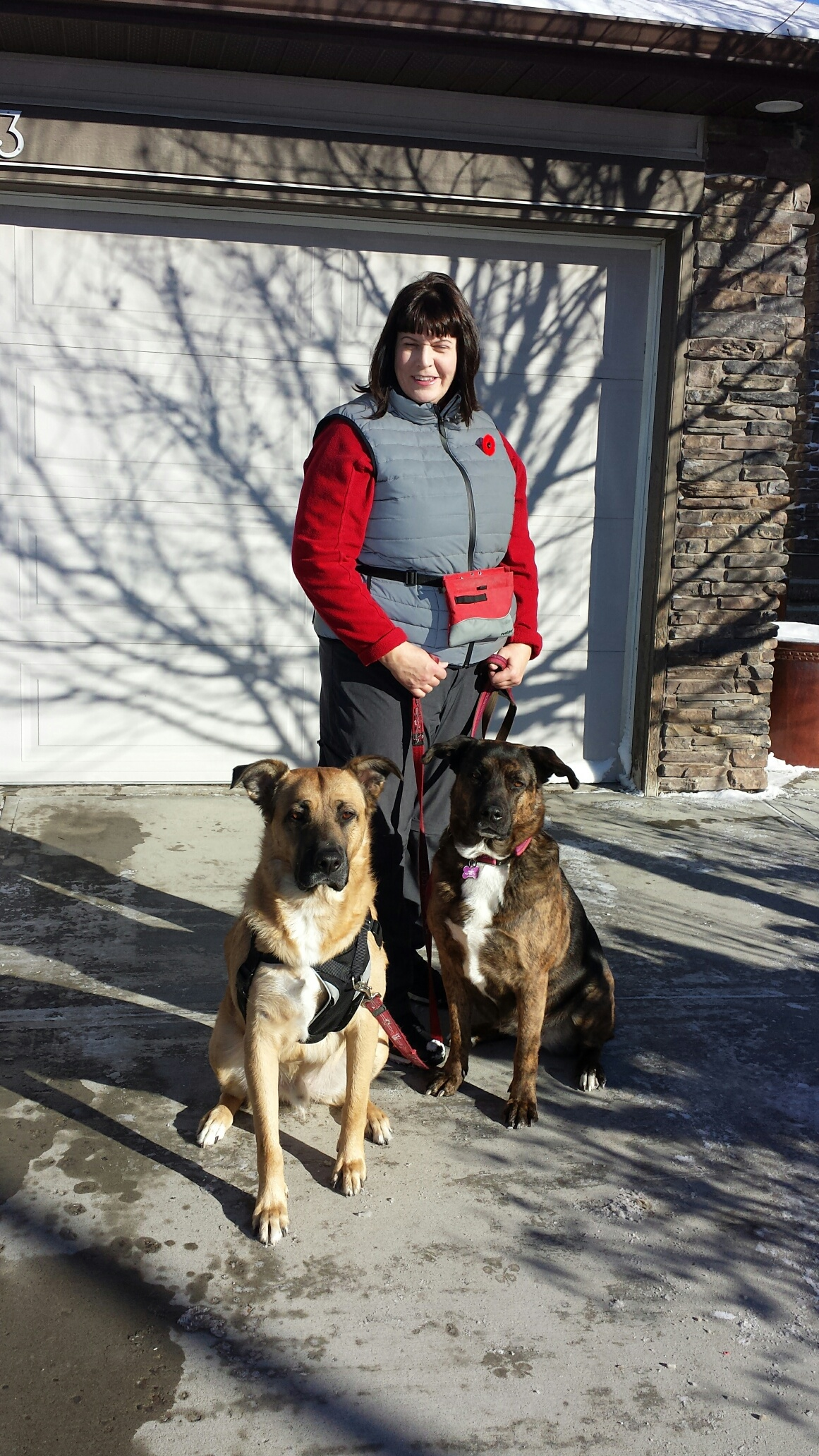 """Enzo and Pepper - walking clients - We have one mastiff cross rescue, Pepper, and when we adopted a second younger mastiff cross, Enzo, this year we knew we might need some help with managing their different training and energy needs between the two dogs.We have loved learning from Donna all things """"dog"""" and have improved how we train and live with our pups as a result. Donna speaks fluent """"Dog"""" and has a gift for understanding dogs and their behavior. She brings knowledge and an approach that is fun, patient and thoughtful. These attributes quickly built trust and put our dogs at ease. They eagerly put their energy into sessions and walks with Donna, she is definitely their favorite visitor!Walking two 80-90 pound pups is something we need to do safely. Donna has been working closely with us to understand and manage their impulse control, particularly with bunnies and squirrels in our neighborhood. On walks together, she's explained dog psychology and given us really useful techniques for managing those super-exciting bunny sightings! I used to try to avoid bunnies, other dogs, and people all together, but not being a realistic strategy, we now can more confidently continue on our way.Besides training our dogs, Donna also put in extra time to show us brain games, trials of dog toys, and harnesses. The harness she recommended substantially reduced Enzo's pulling on his leash and is more ergonomic for his body type. I appreciate having her guidance – pet supply stores have received a lot of our money unnecessarily!Donna's training has been amazing. Her professionalism, kindness and genuine love of dogs is apparent. We really appreciate that she works around our schedules and was there to support our home/dog sitter while we were away on vacation – it brought peace of mind to have her nearby and so happy to help.Jaime and family"""