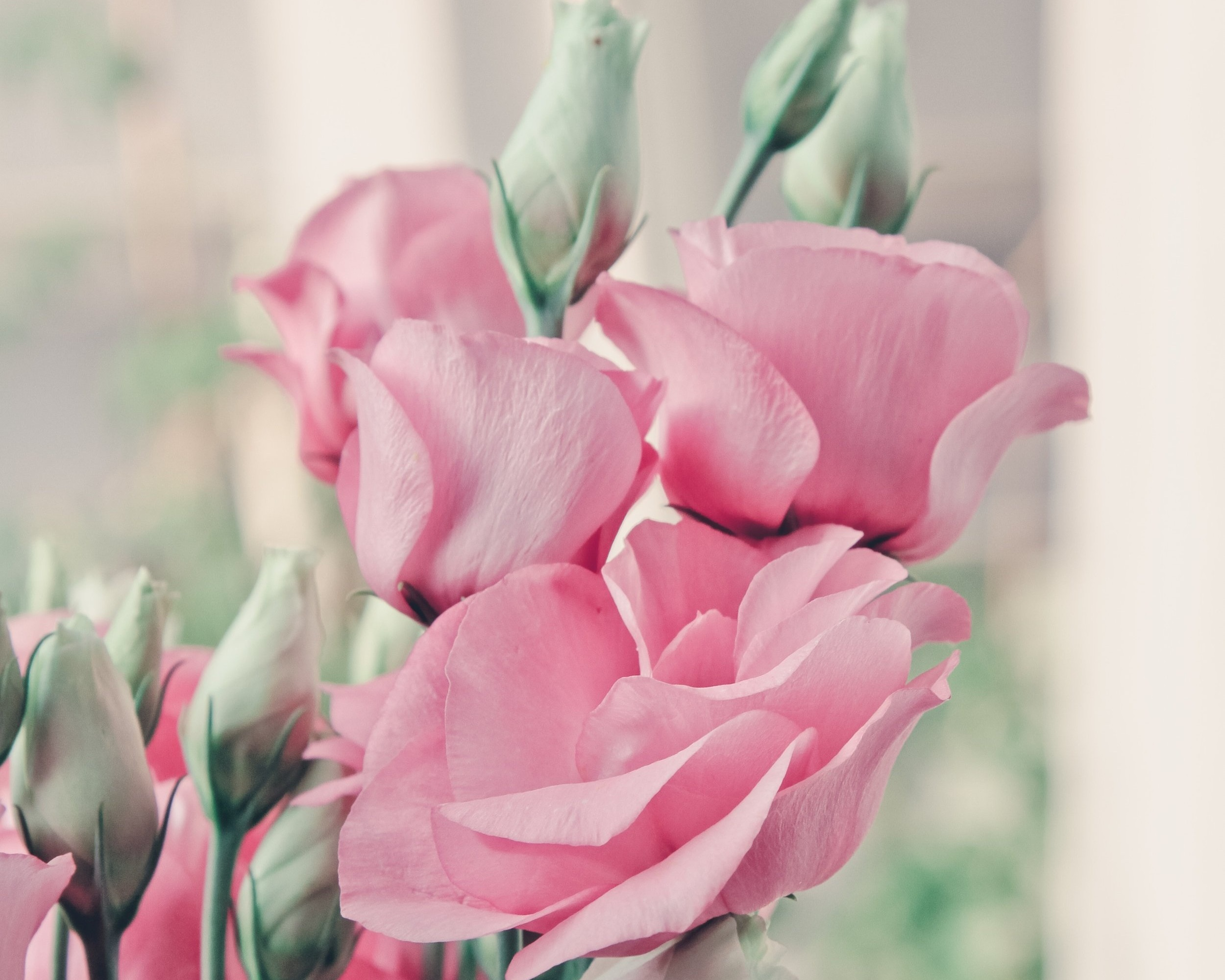 Roses - Roses are the most traditional flower given on Valentine's Day and for good reason!
