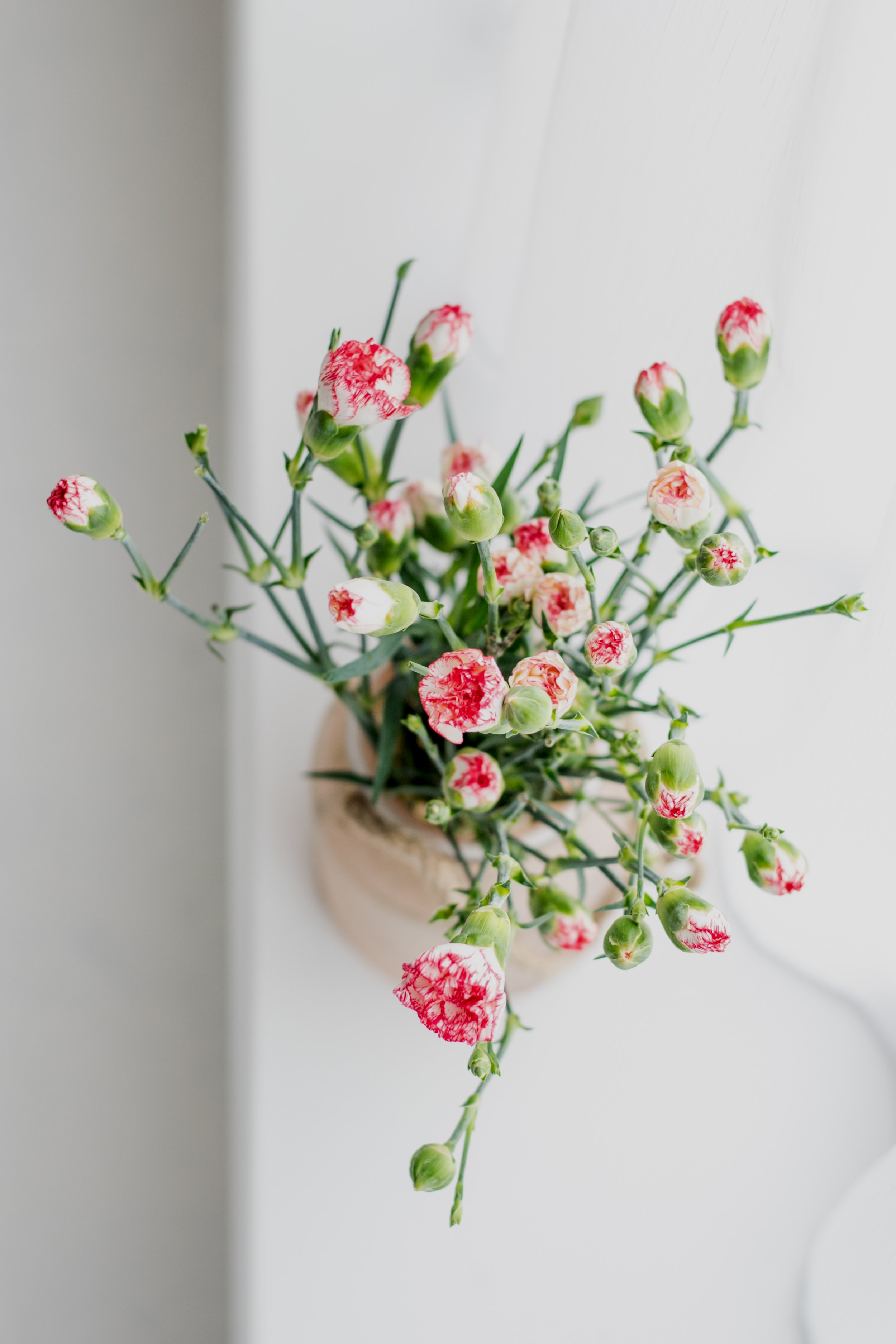 Carnations - Carnations are a very popular flower on Valentine's Day and all year round! Their delicate petals range in colour from deep reds through to green and they carry different messages for each!