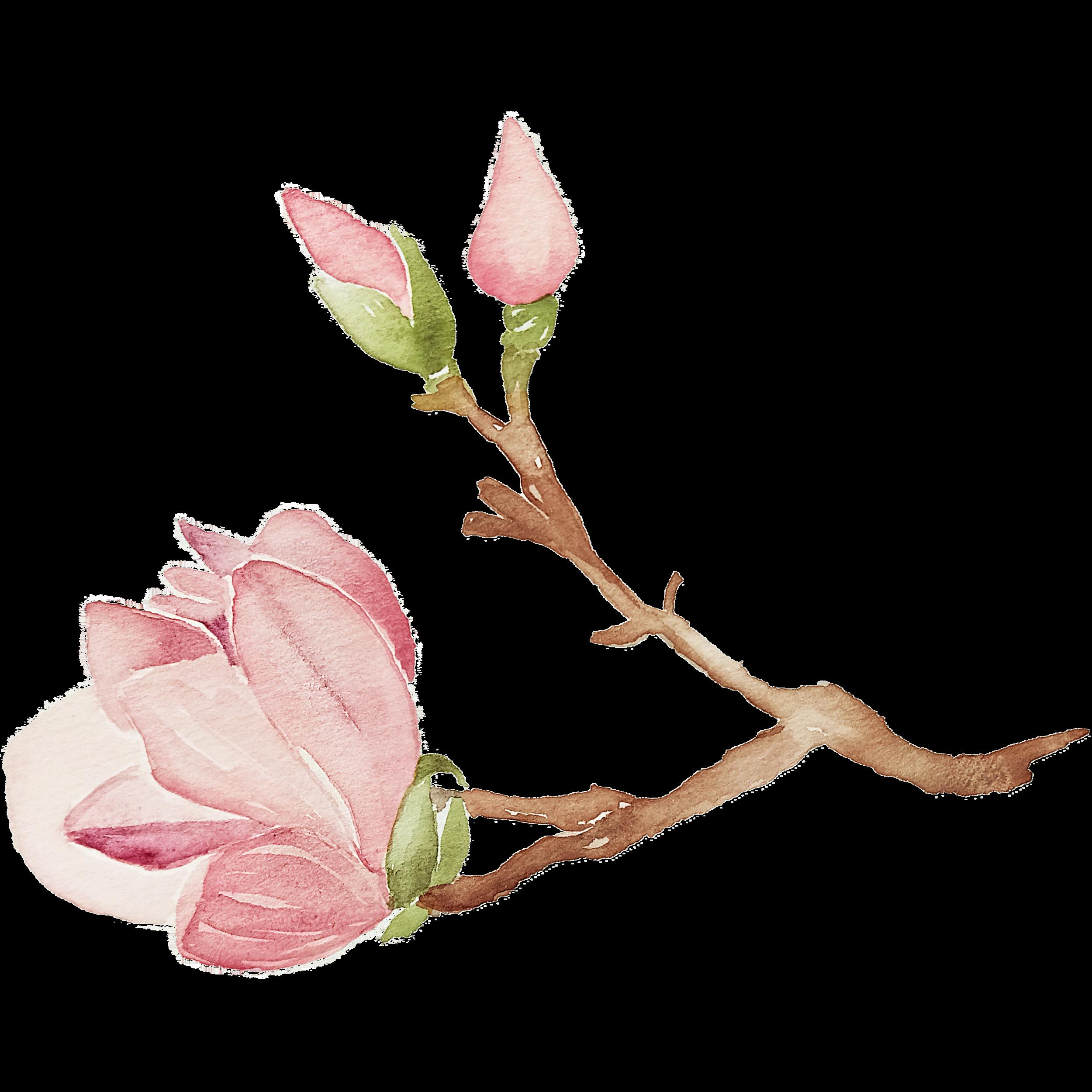 IanMikraz-Watercolor-Magnolia-Flower-Illustration-Graphics-08.png