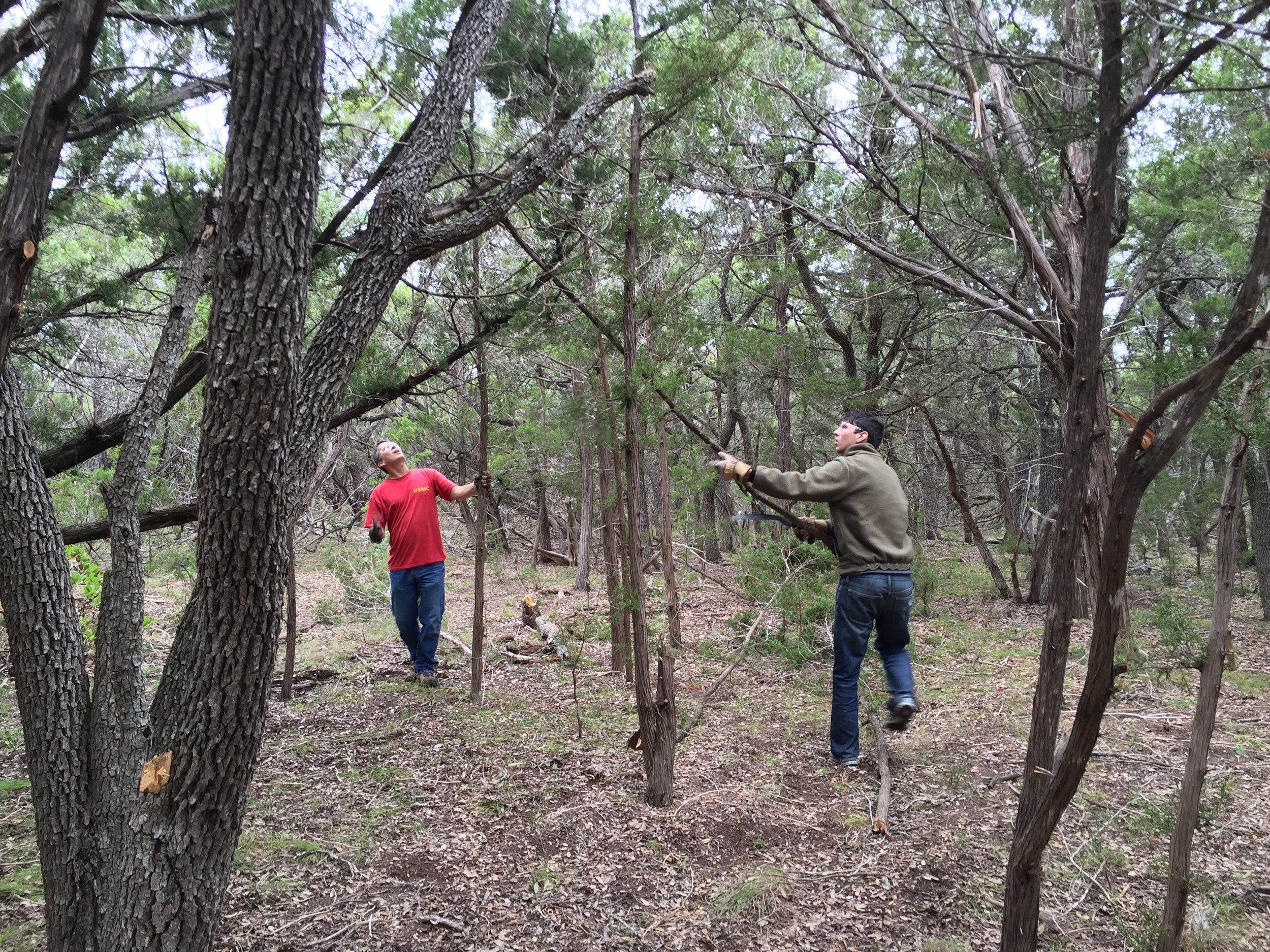 Joe and tyler clearing small cedars