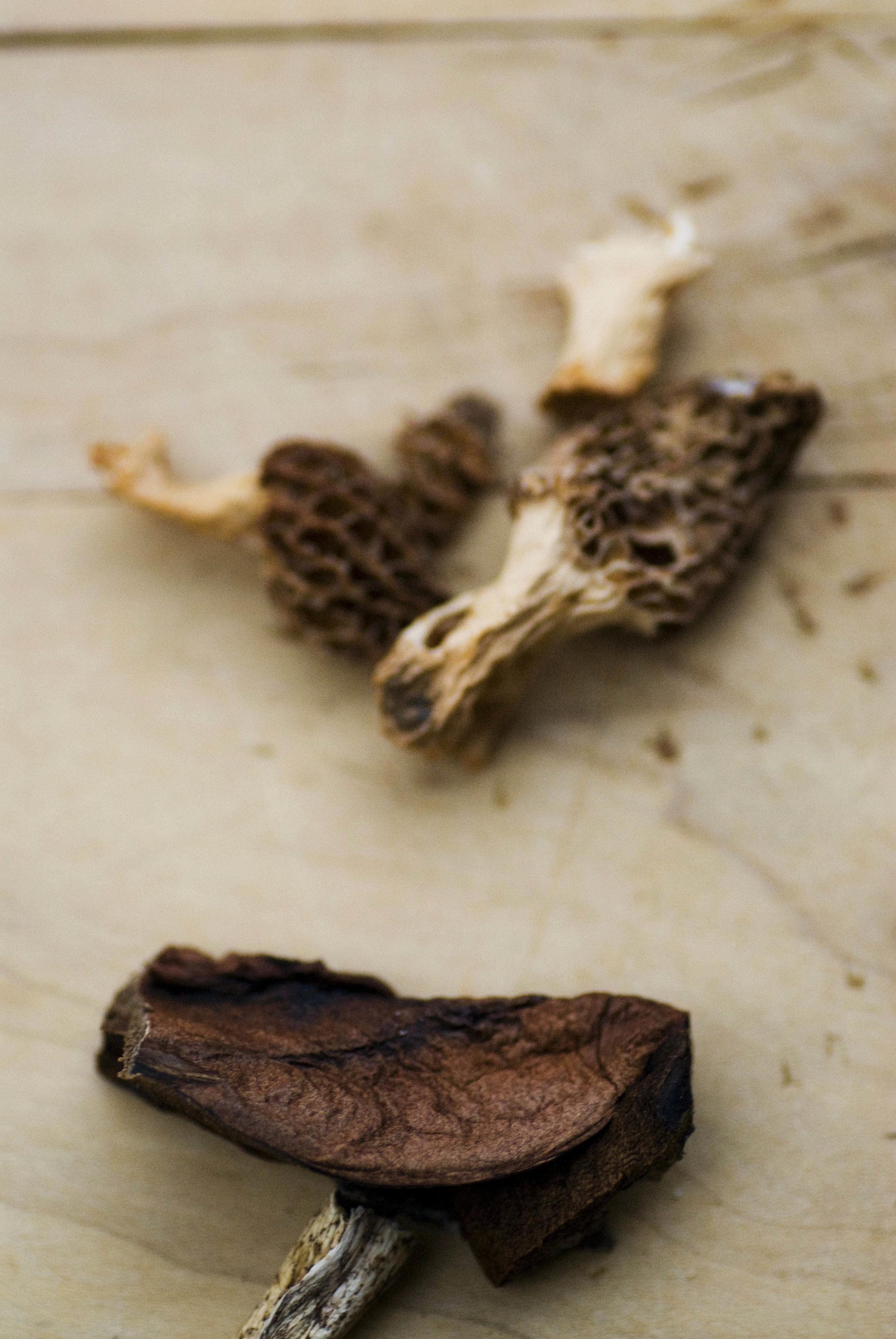 mushroomsalti2.jpg