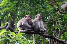 Monkey Forest.jpeg