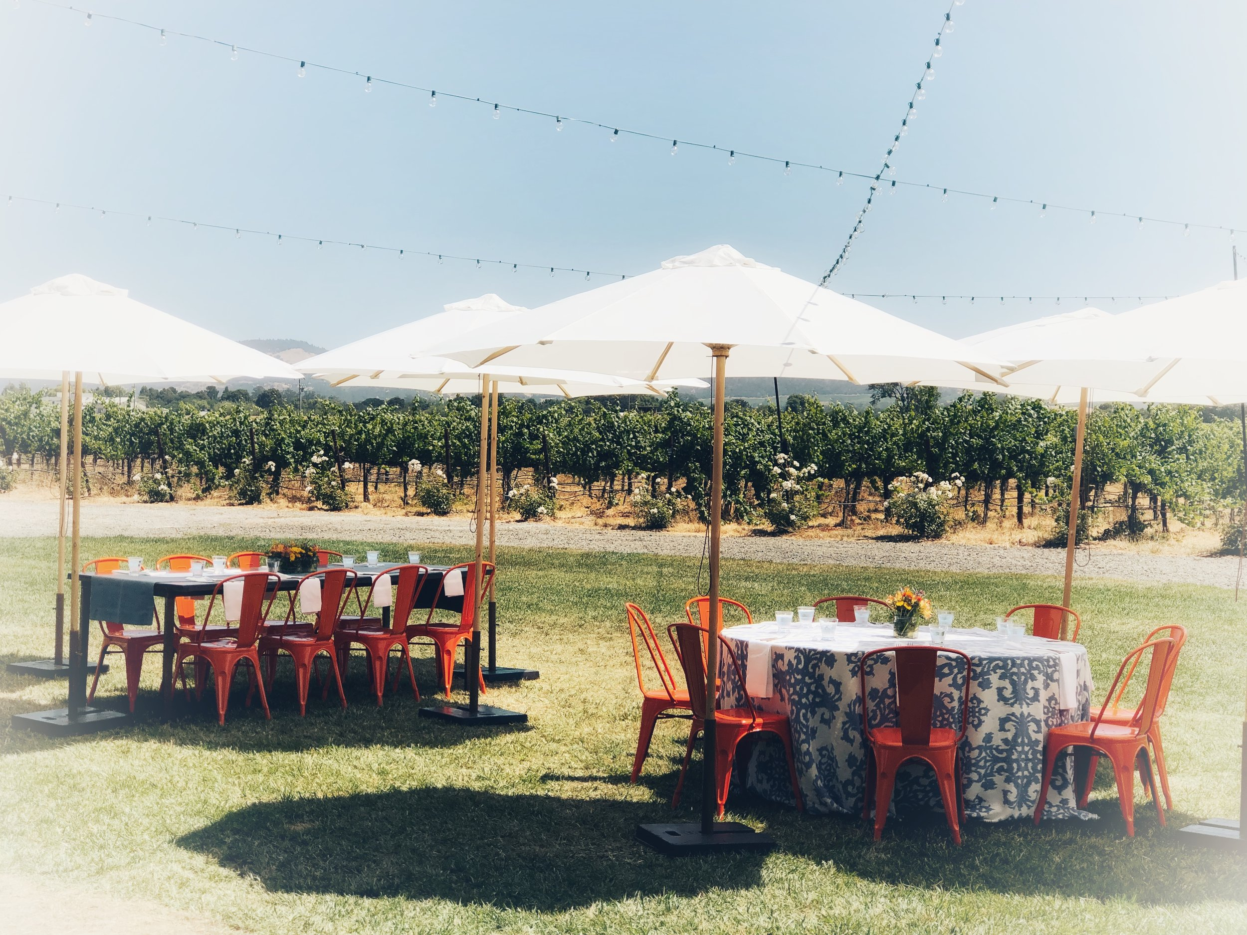 Vineyard Picnics   Table. Set. Ready. Go. How close the vineyards would you like to sit?