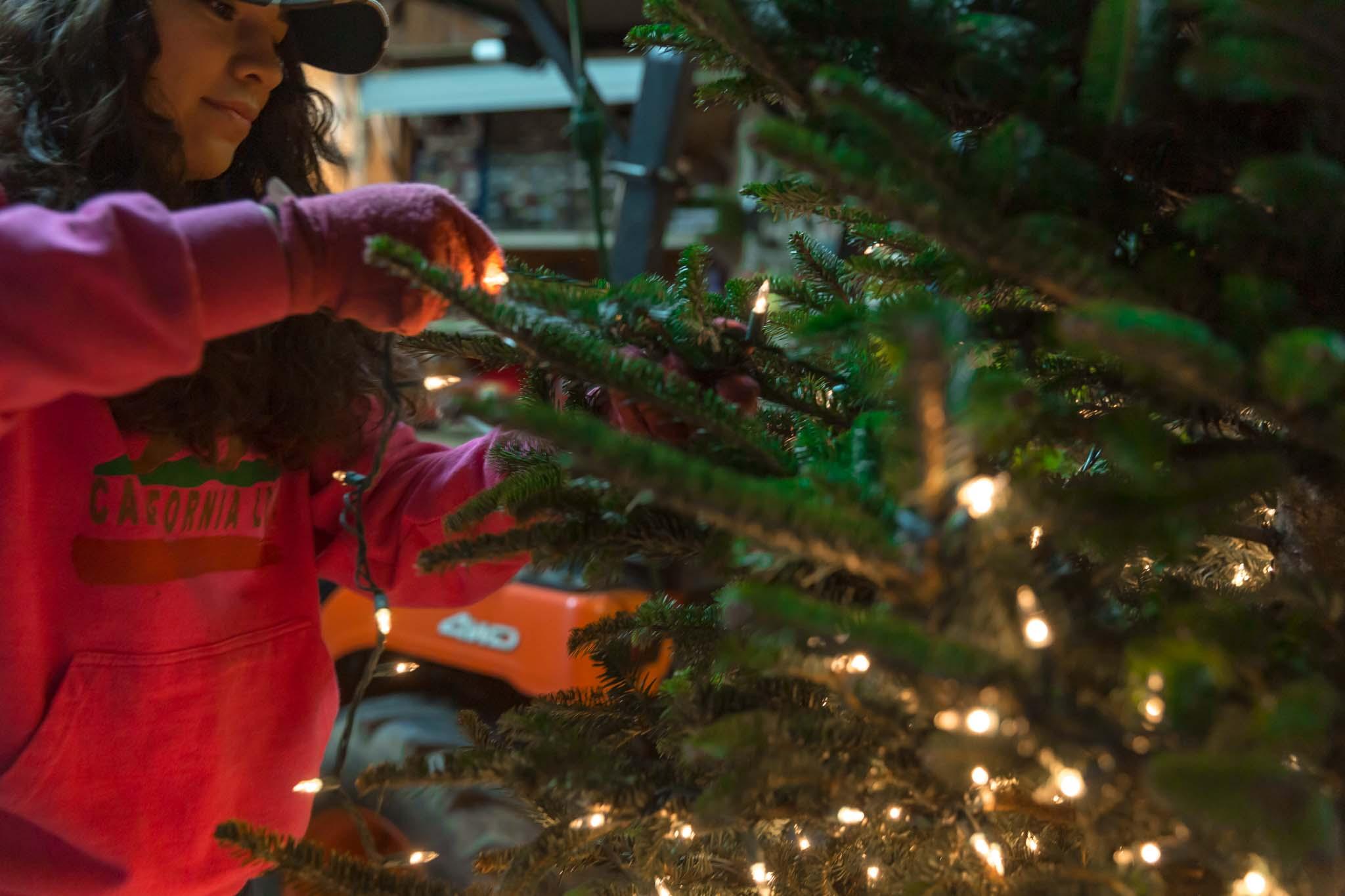 Inspired Southerner_Pine Hill Christmas Tree Farm_119.jpg