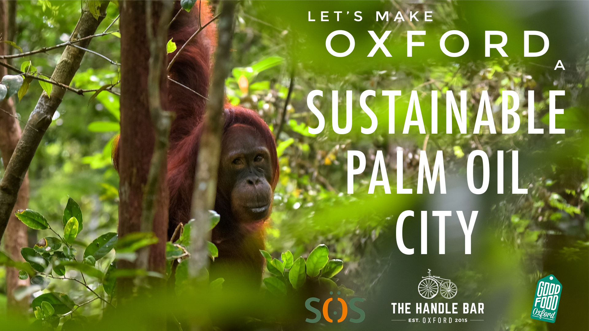 Sustainable Palm Oil City.png