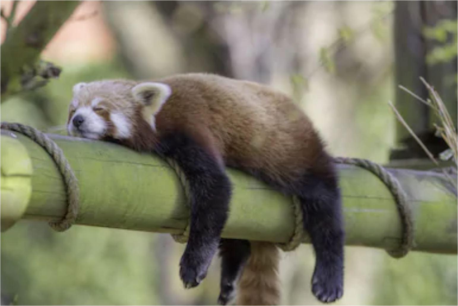 sommerferien schlafen.JPG