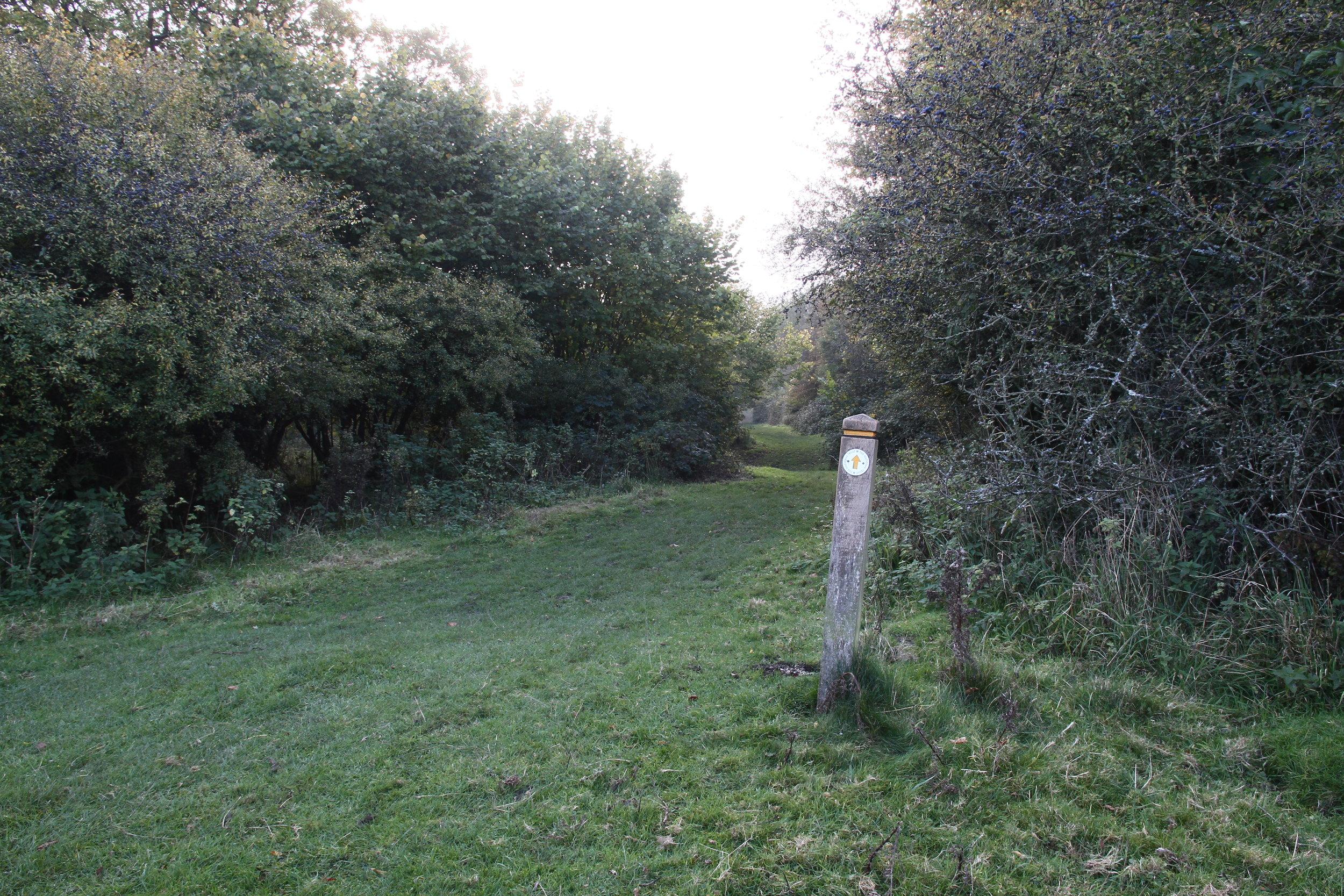 Hatfield Forest, Essex II.JPG