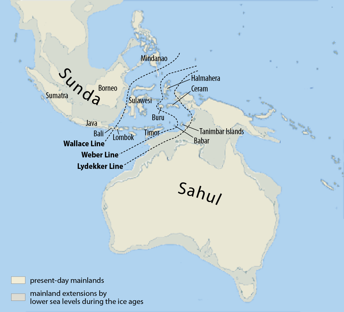 During the Pleistocene period, Australia and New Guinea would have been connected at various points.  Map Source