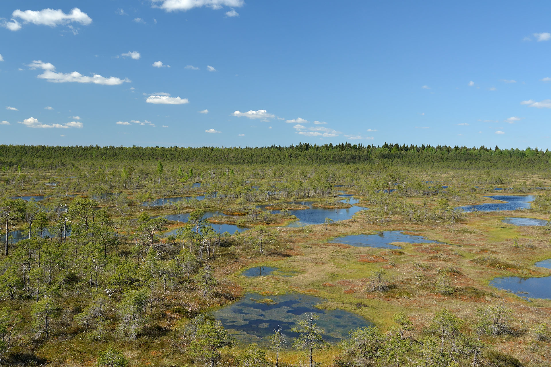 Much of the Netherlands may have looked like. Männikjärve bog in Estonia. Photo by Iifar - Own work, CC BY-SA 3.0,  https://commons.wikimedia.org/w/index.php?curid=19971973