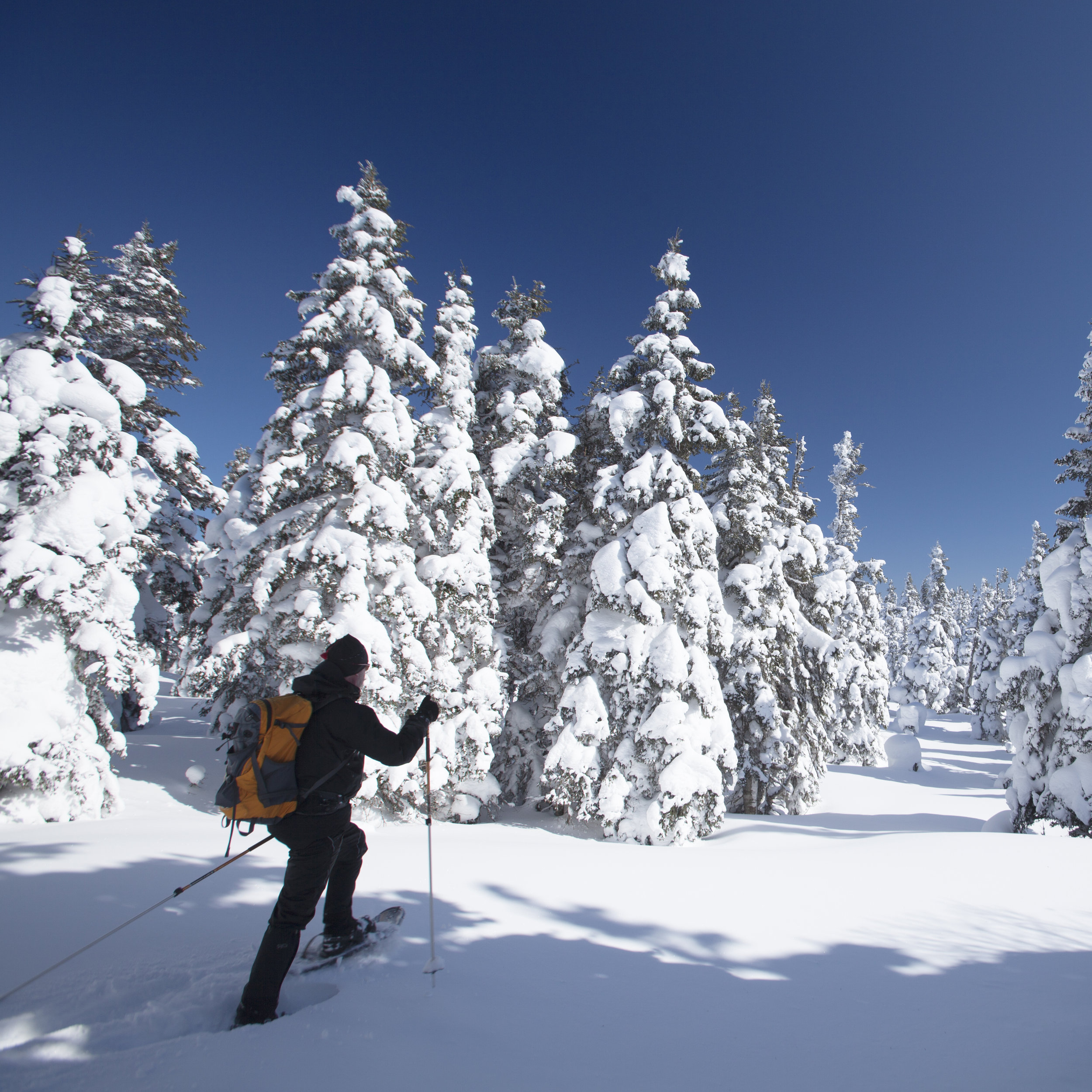 Ski - Association des stations de ski du Québec
