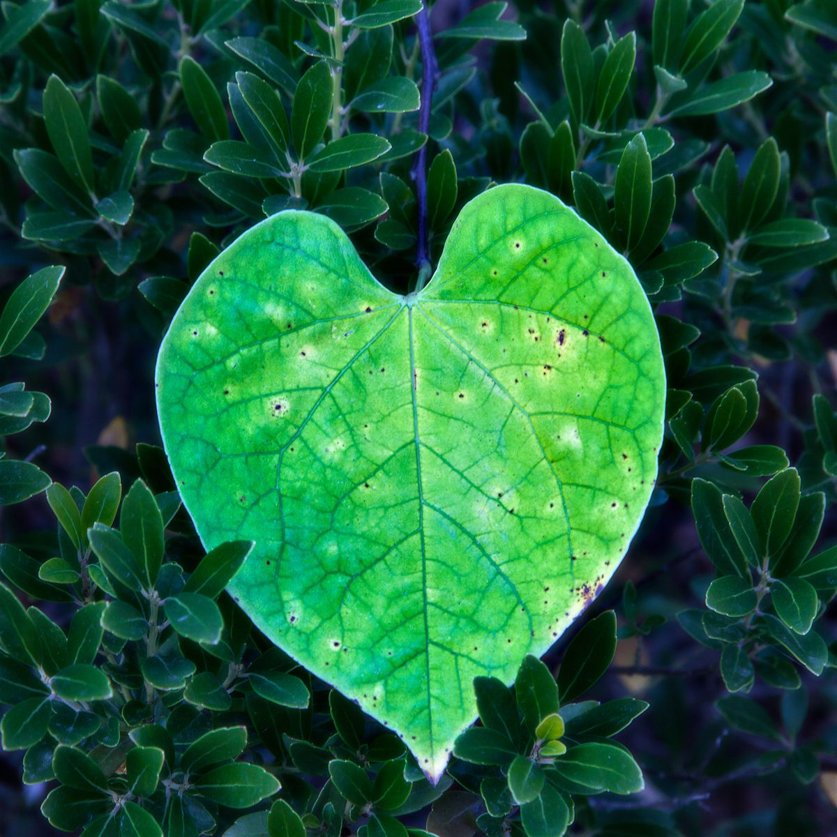 thirty9-homepage-blog-category-image-botanical.jpg