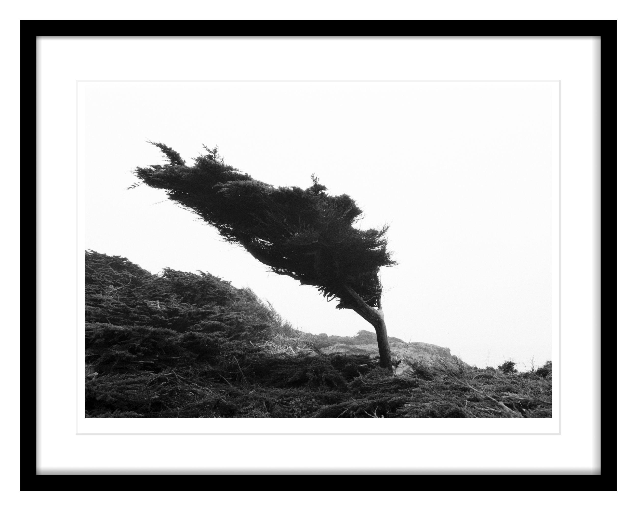 Tree Frame 1.jpg