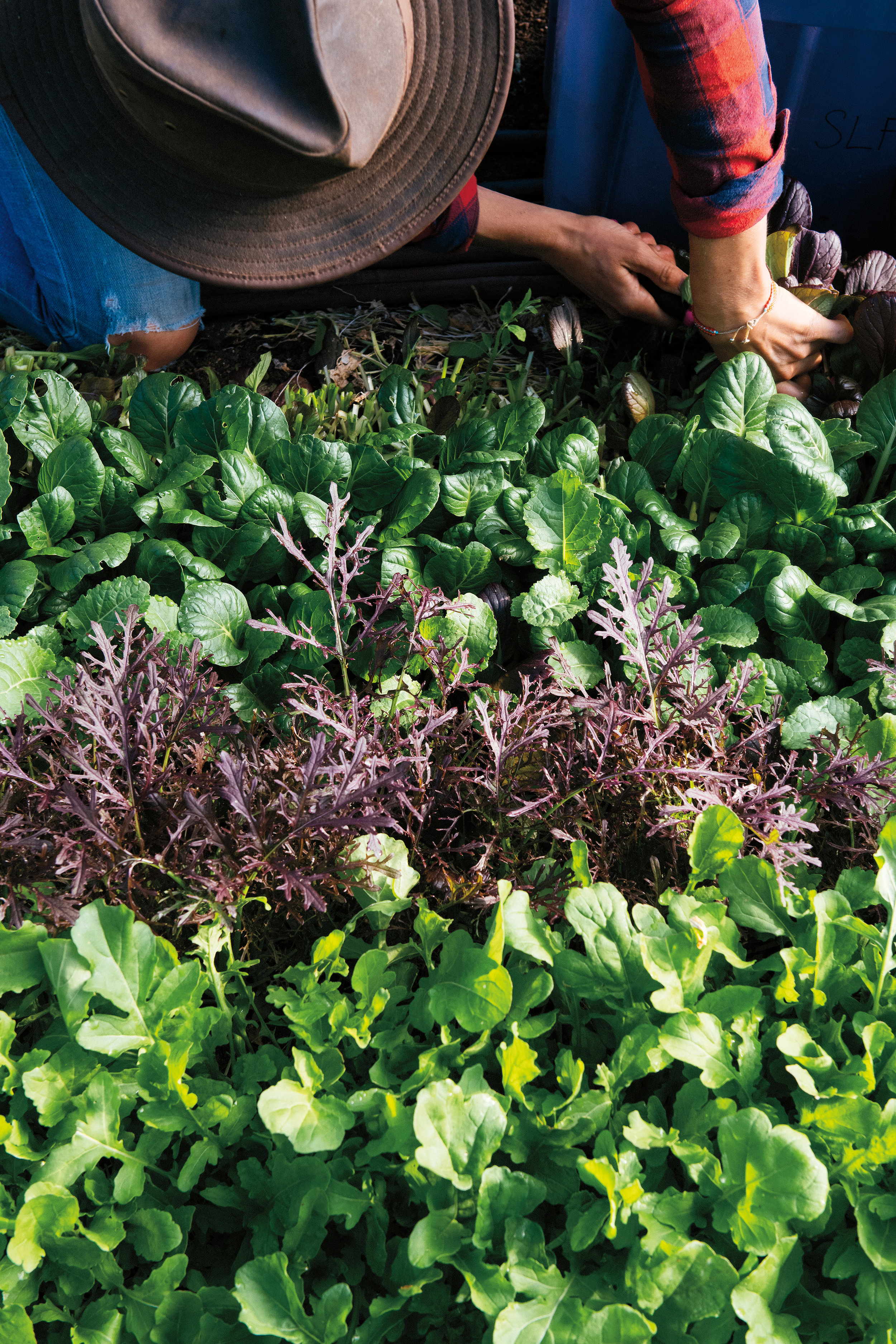 Greens are a large portion of sales at the farm stand.