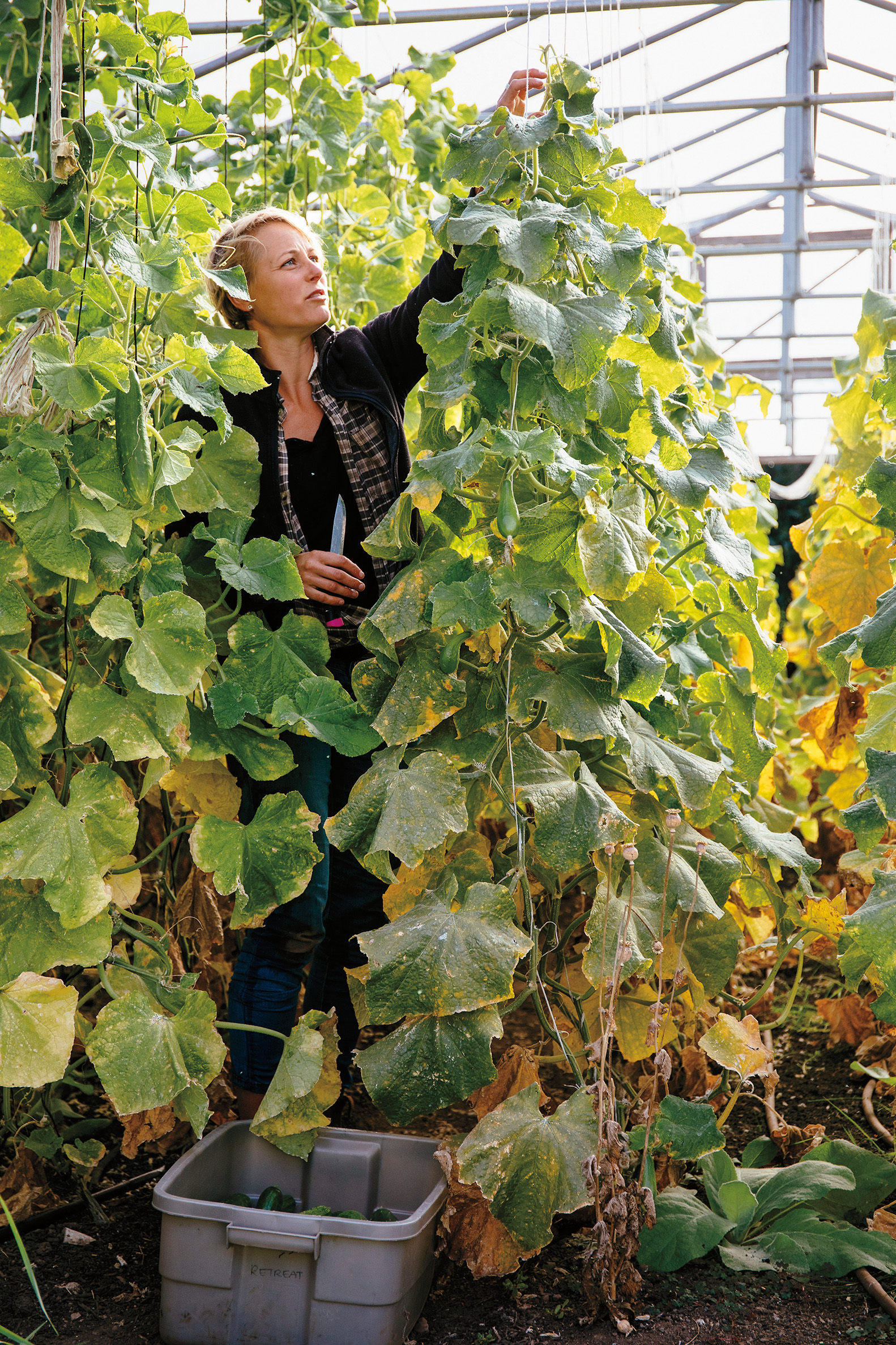 Thea taming the vines.